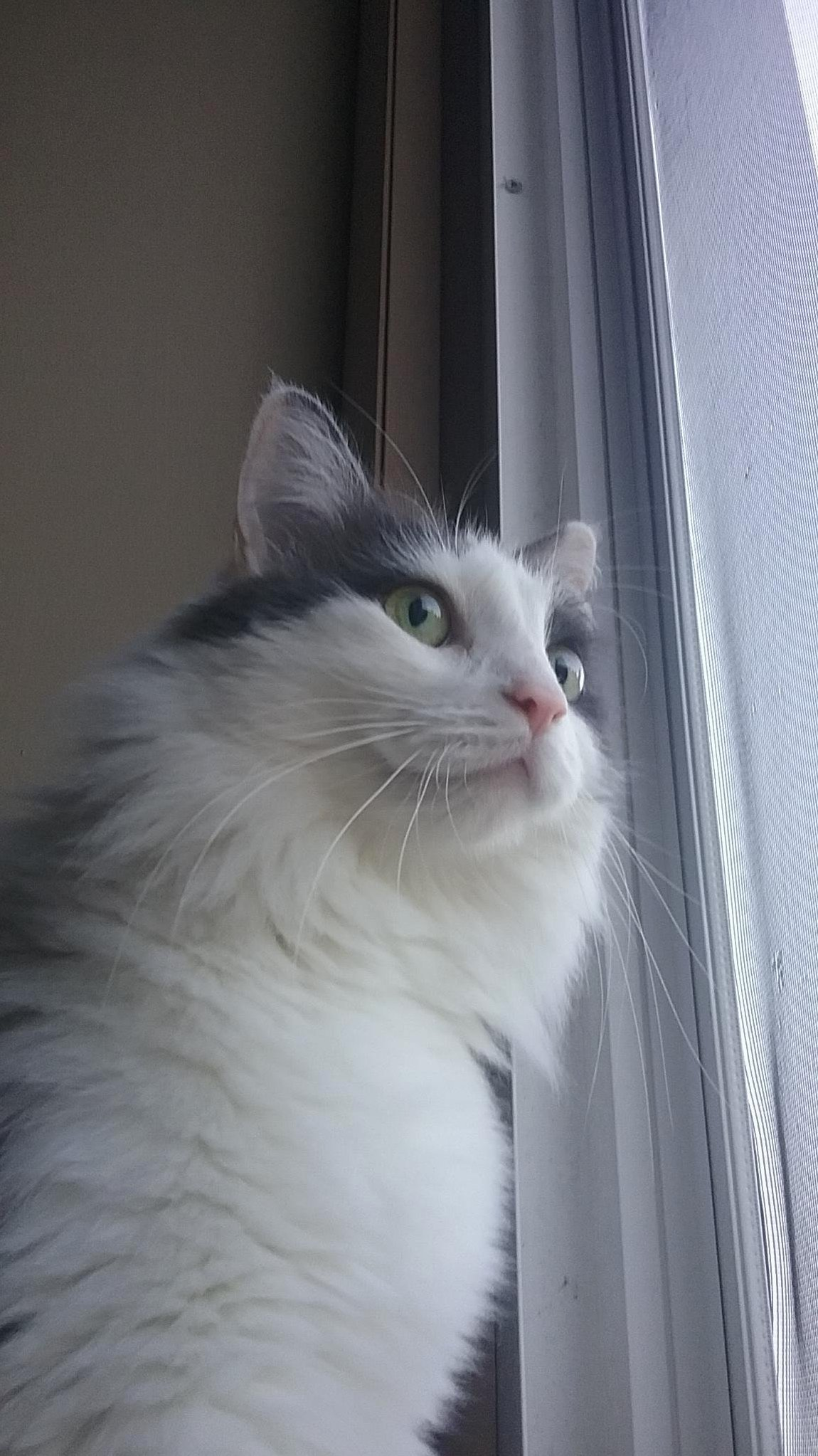 Kizzy loves looking out the window