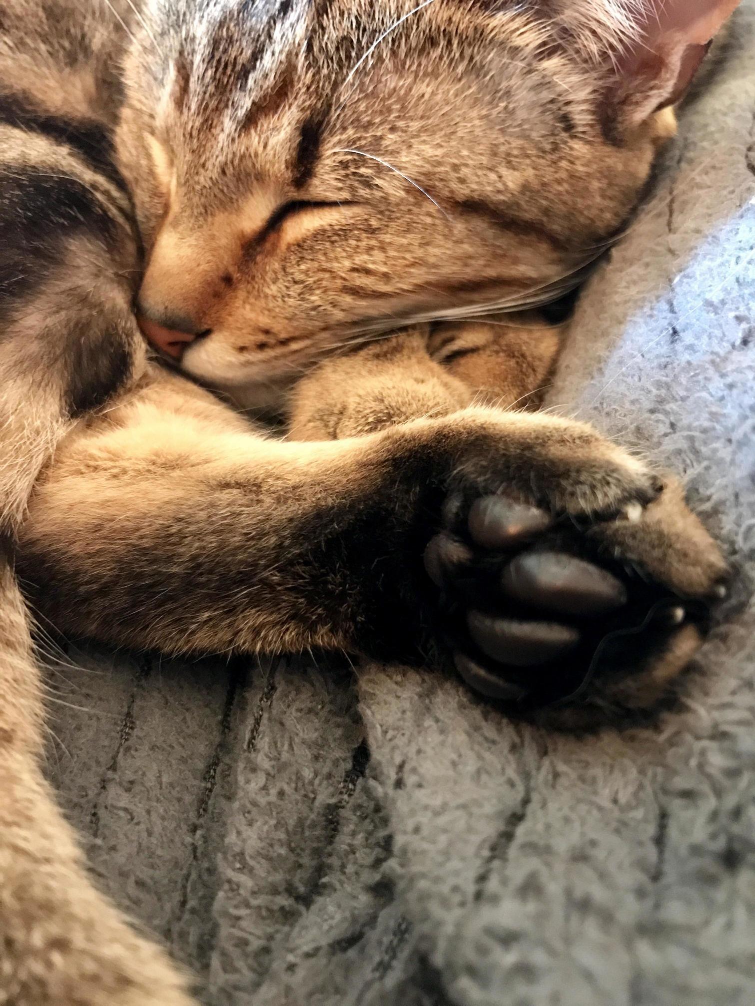 Little black toebeans