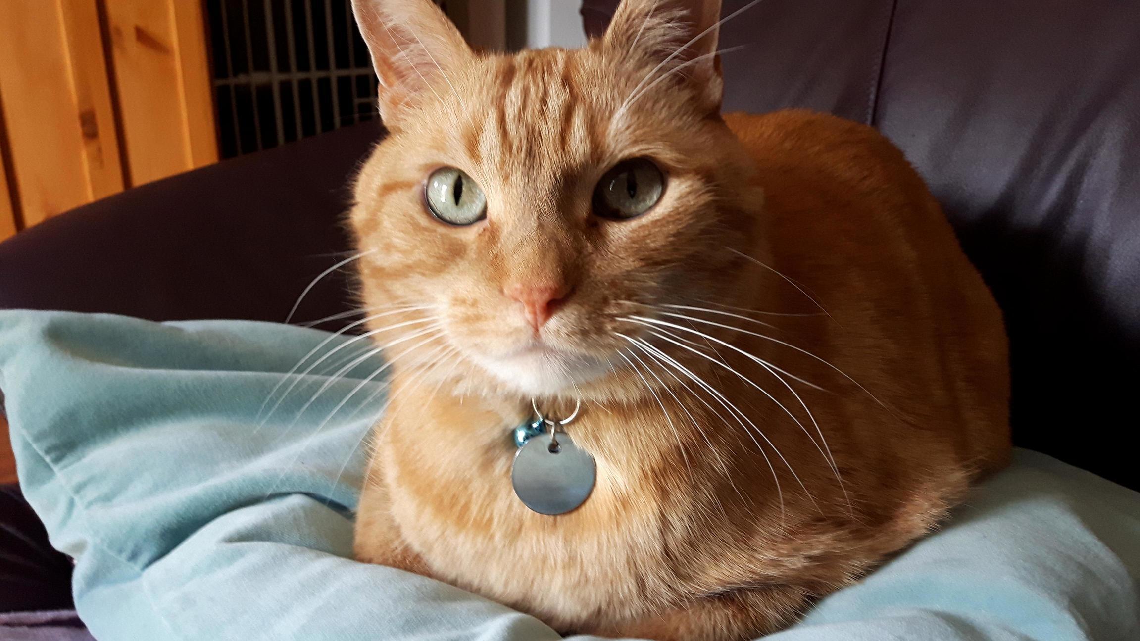 Loafcat awaits his pets