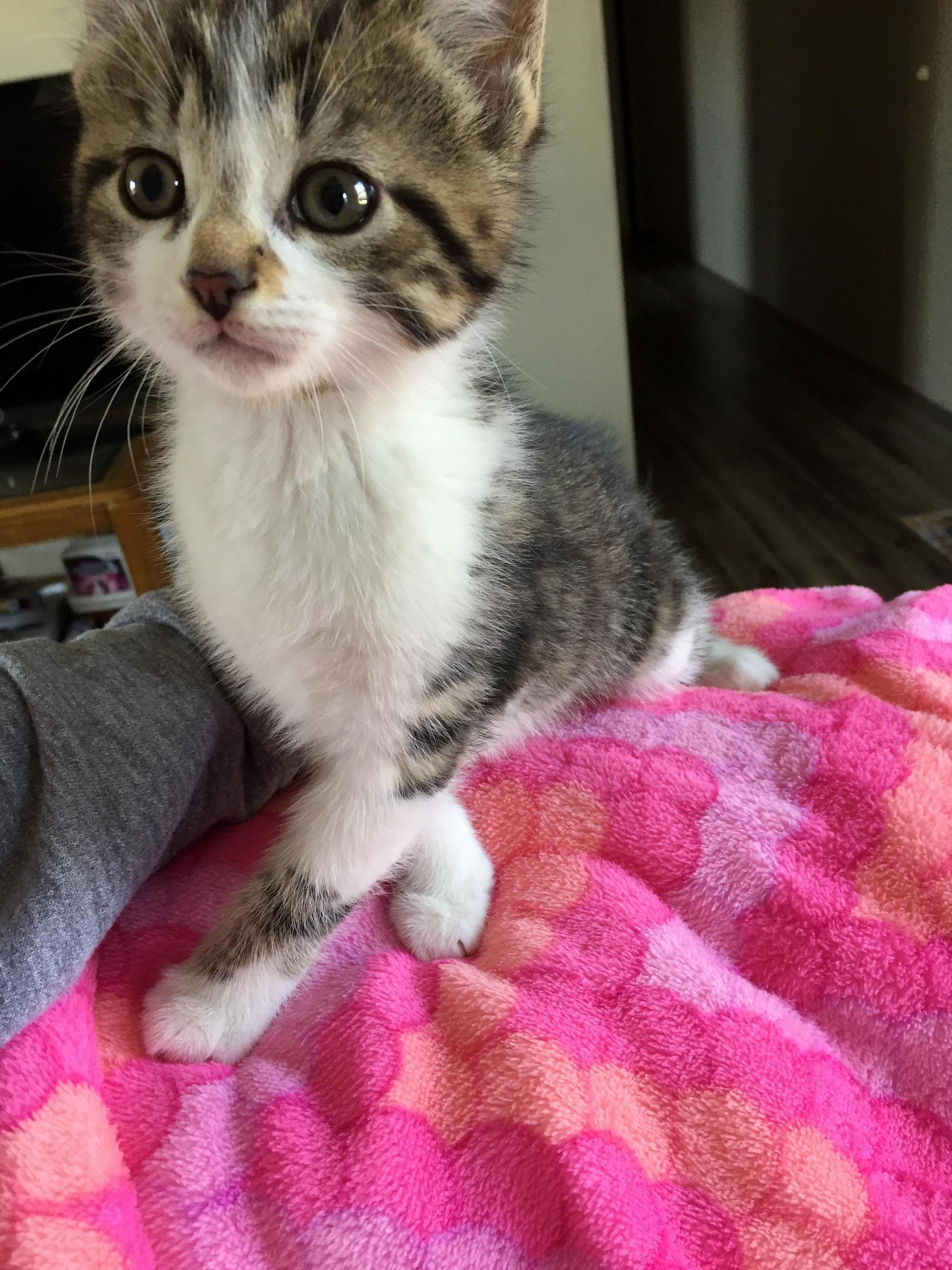 Meet 8 week old blaze. the newest member of my family