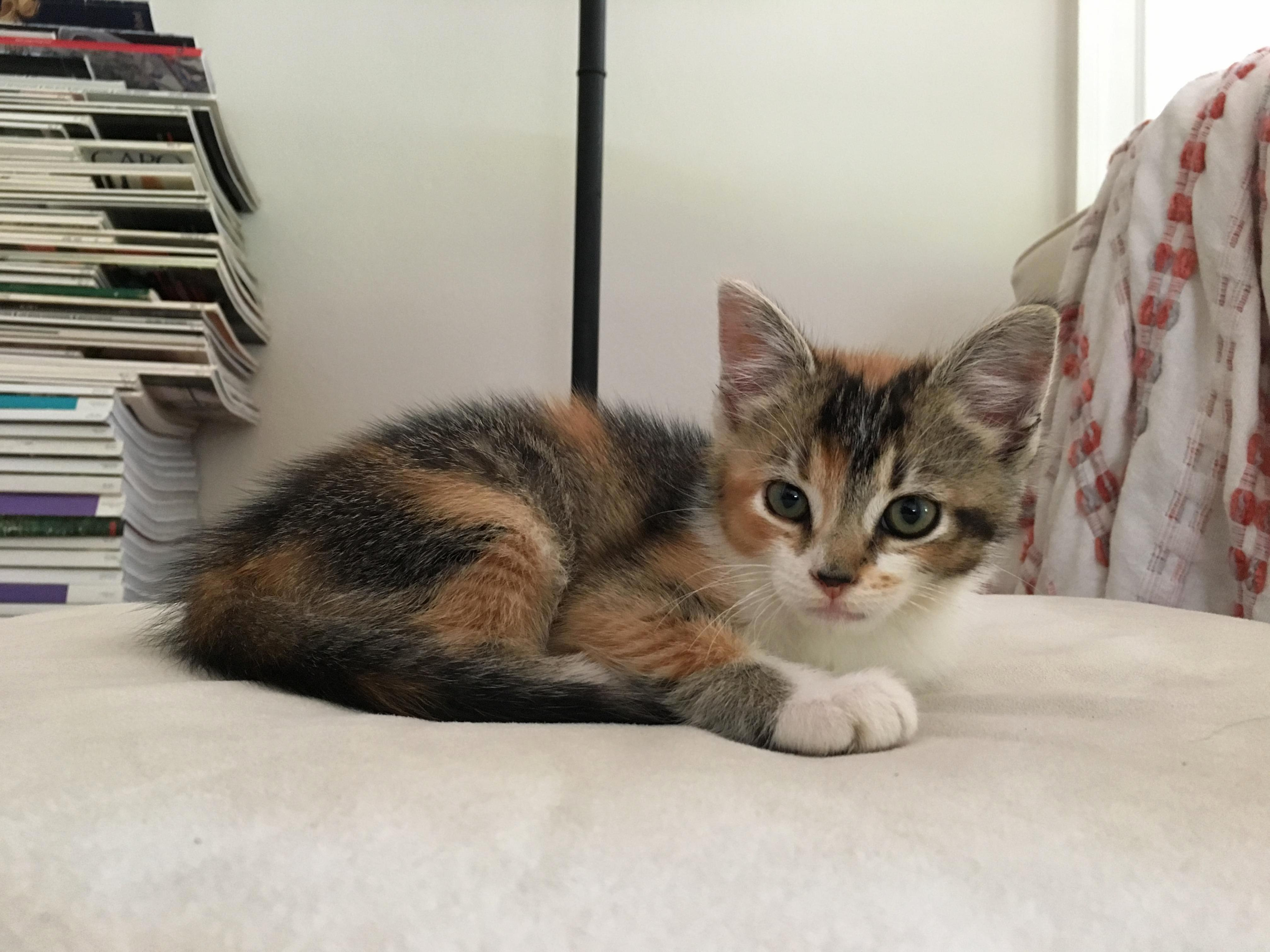 Meet eirene. we rescued her from under a friends deck.