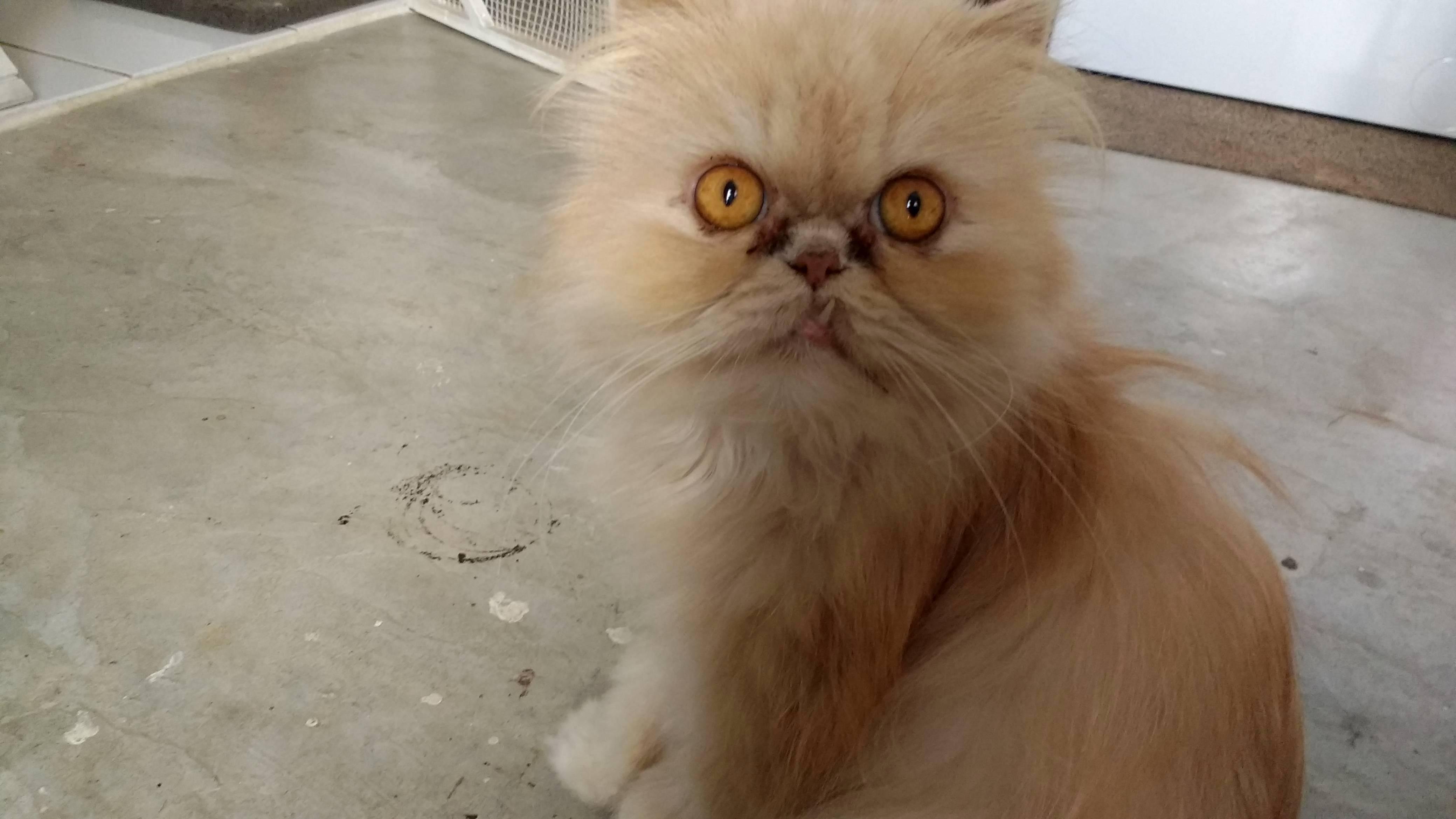 Meet my grandmas latest foster cat rufi.