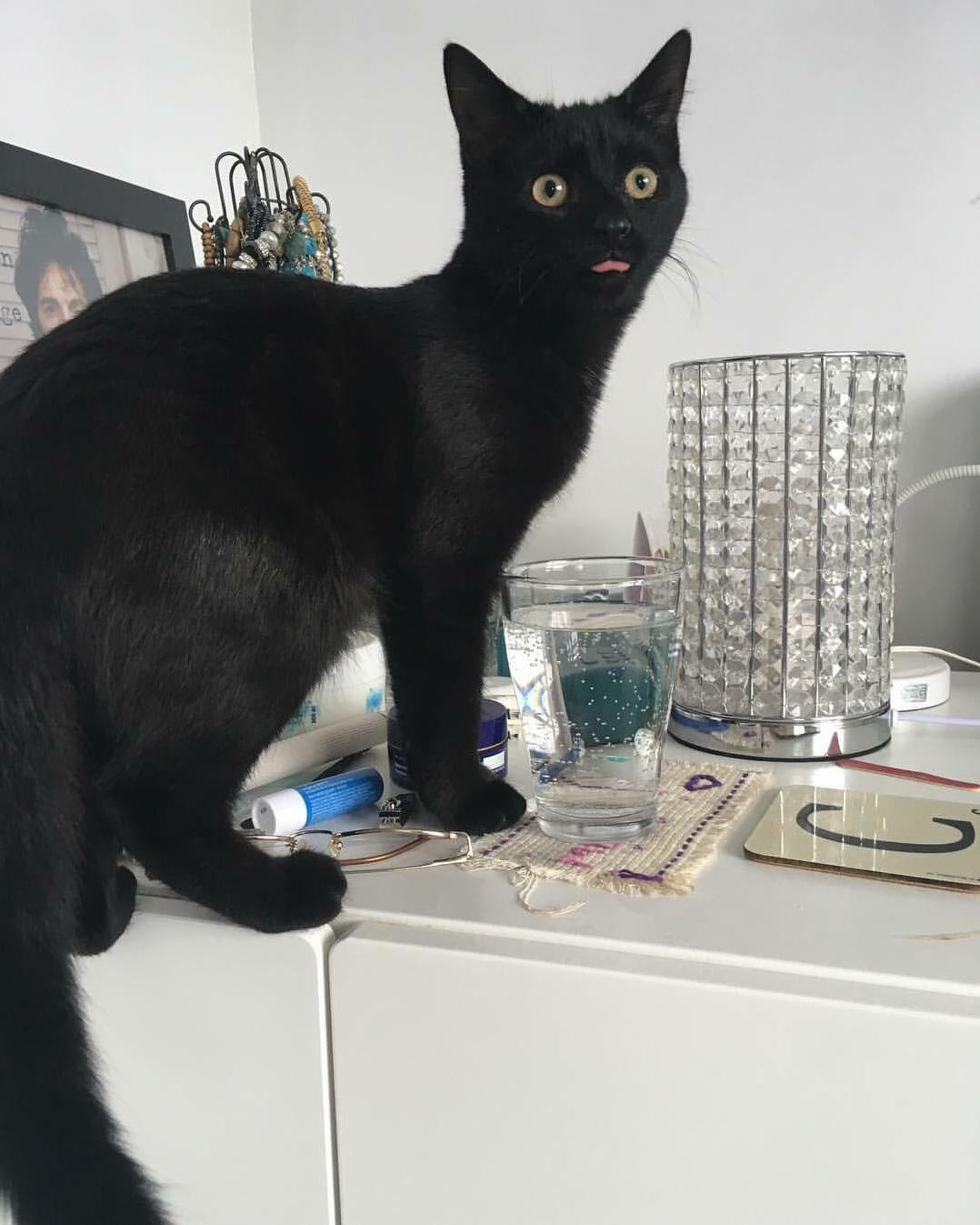 Mika got caught drinking from a water glass that he knew was not for him