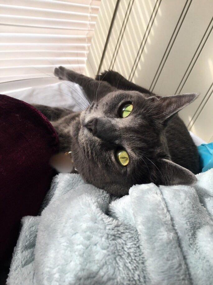 Minzie loves to sunbathe by the window