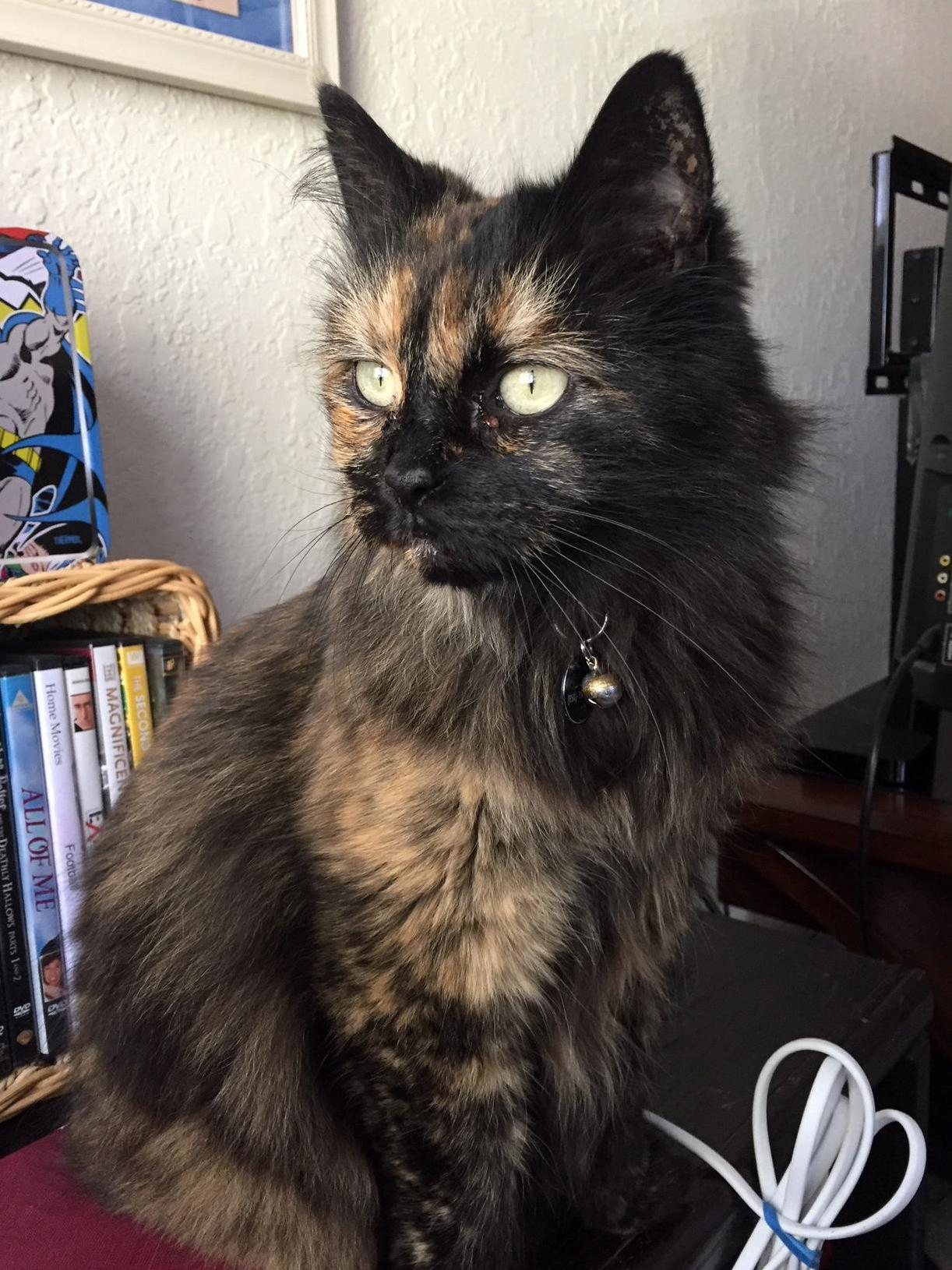 Mourning beautiful muffin girl 8.5 yo. precious baby had cancer had to be put down…