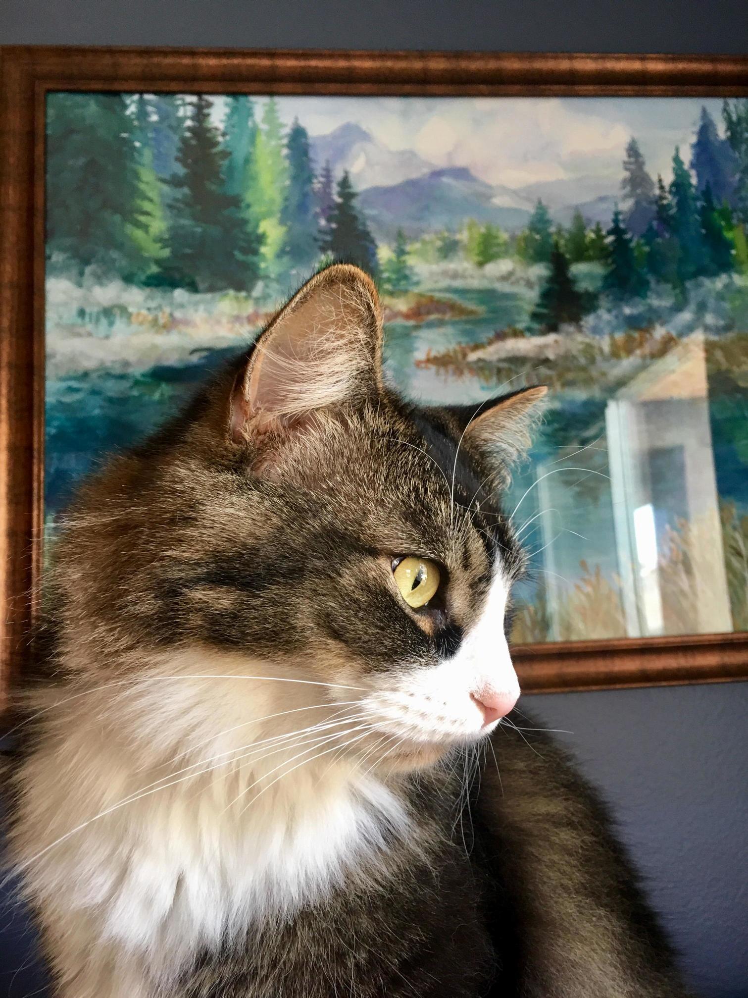 My big kitty.
