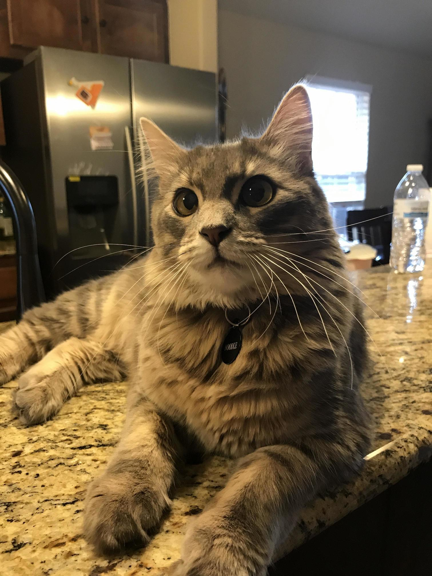 My cat noodle says hi