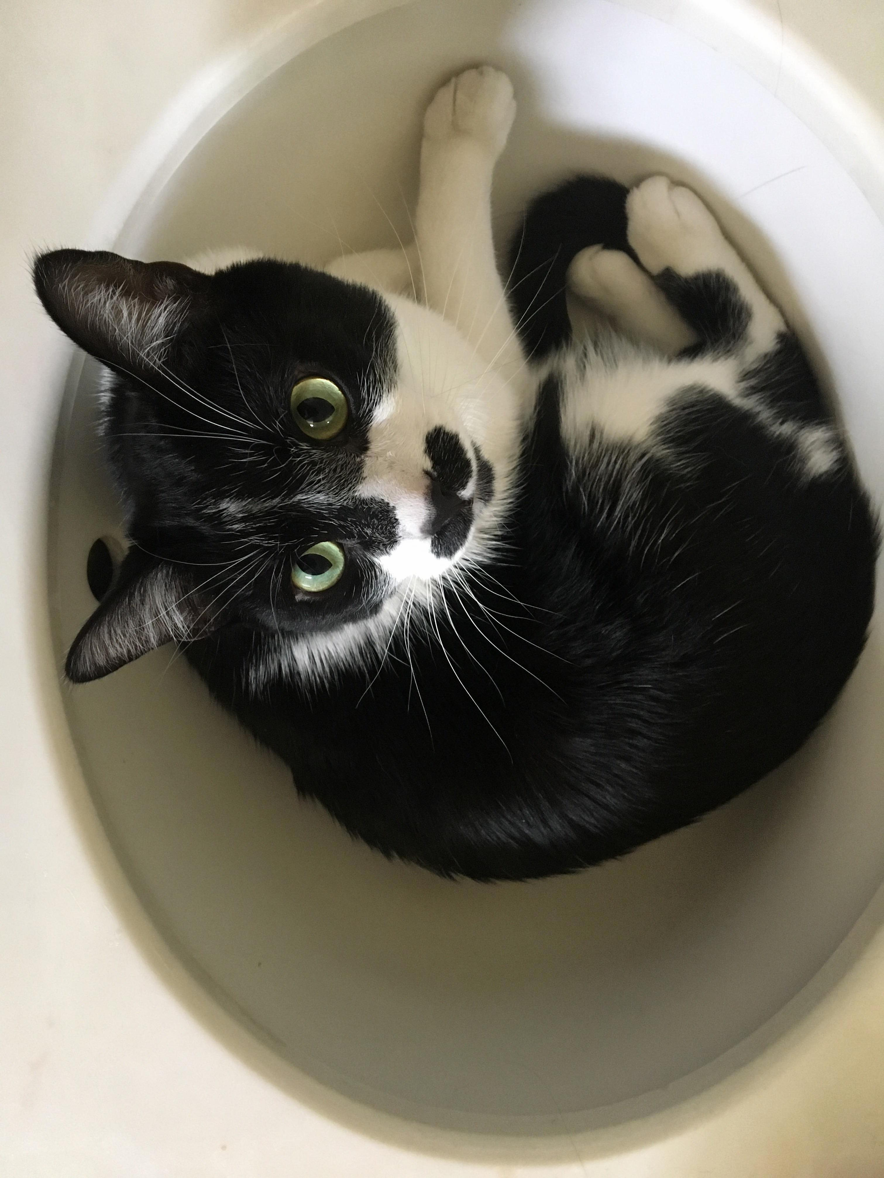 My cat sushi just chilling in the sink