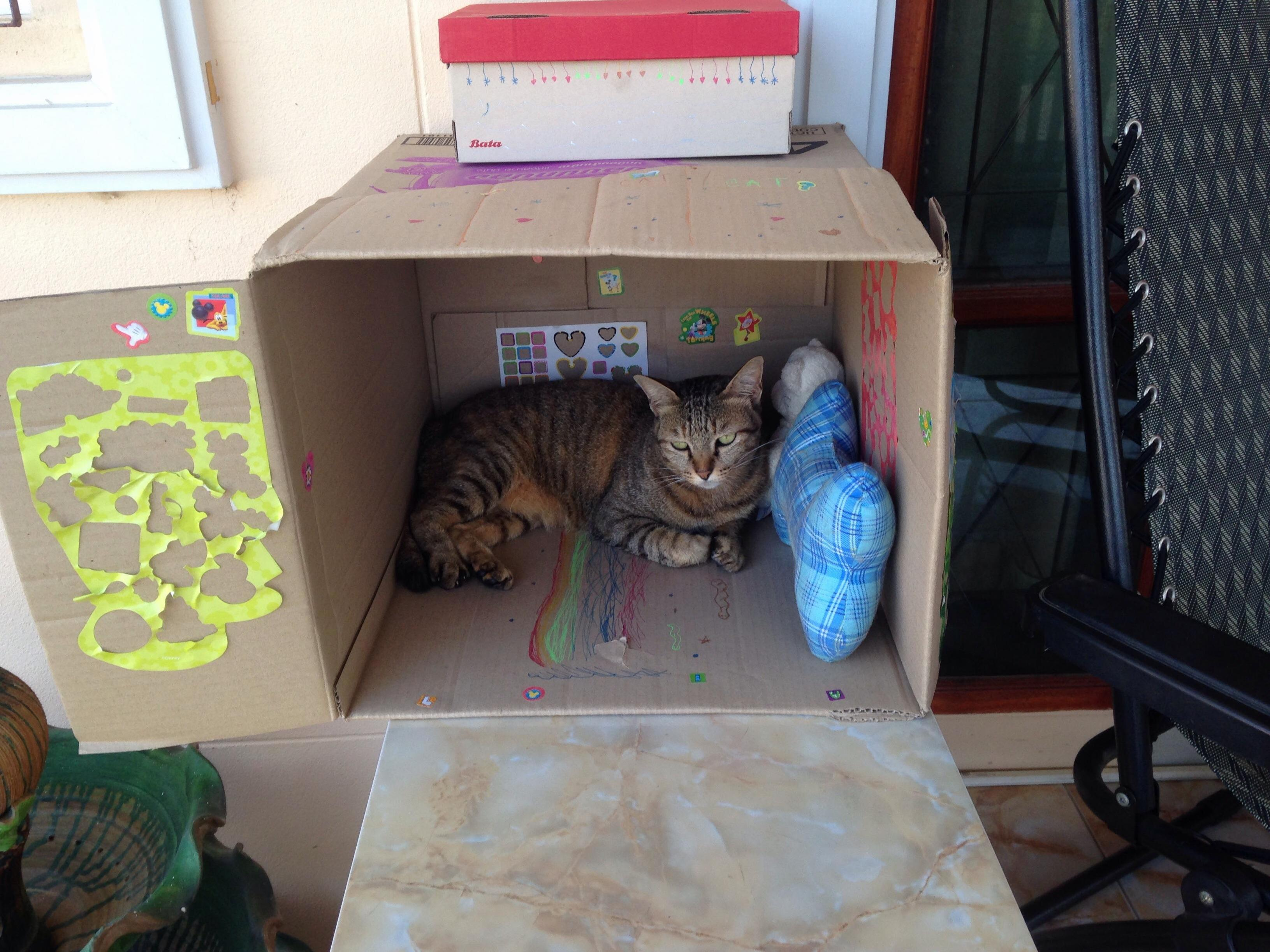 My daughter made tiger a little house today.