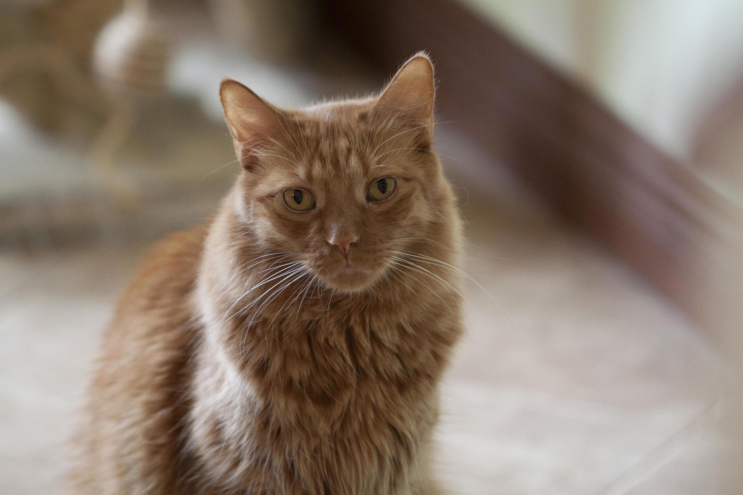 My handsome boy pumpkin left me today at the age of only 9. i am heartbroken.