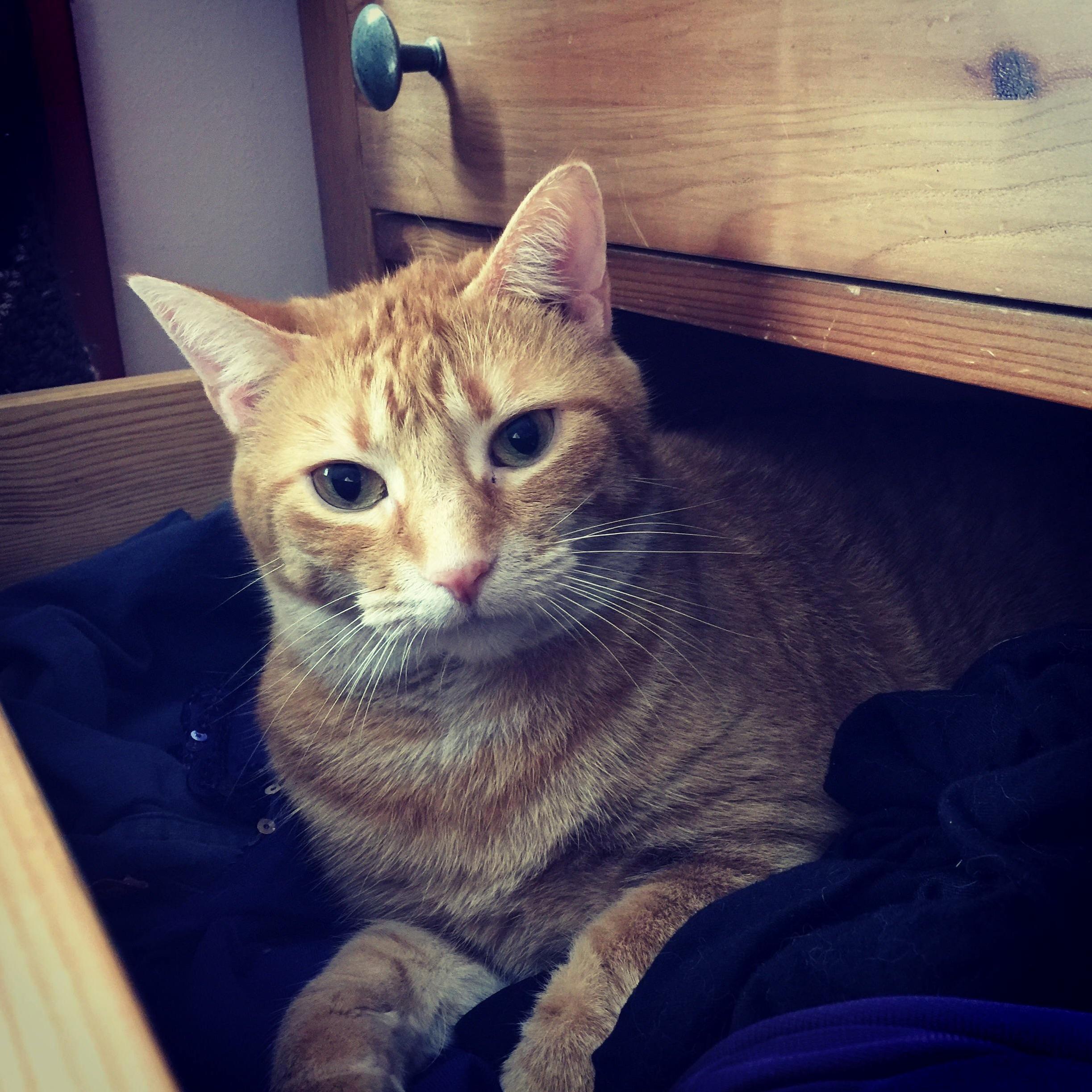 My laundry assistant moomoo.