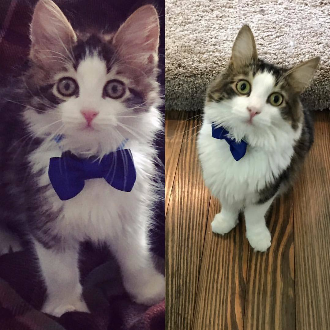 My little boy odin 1 year later