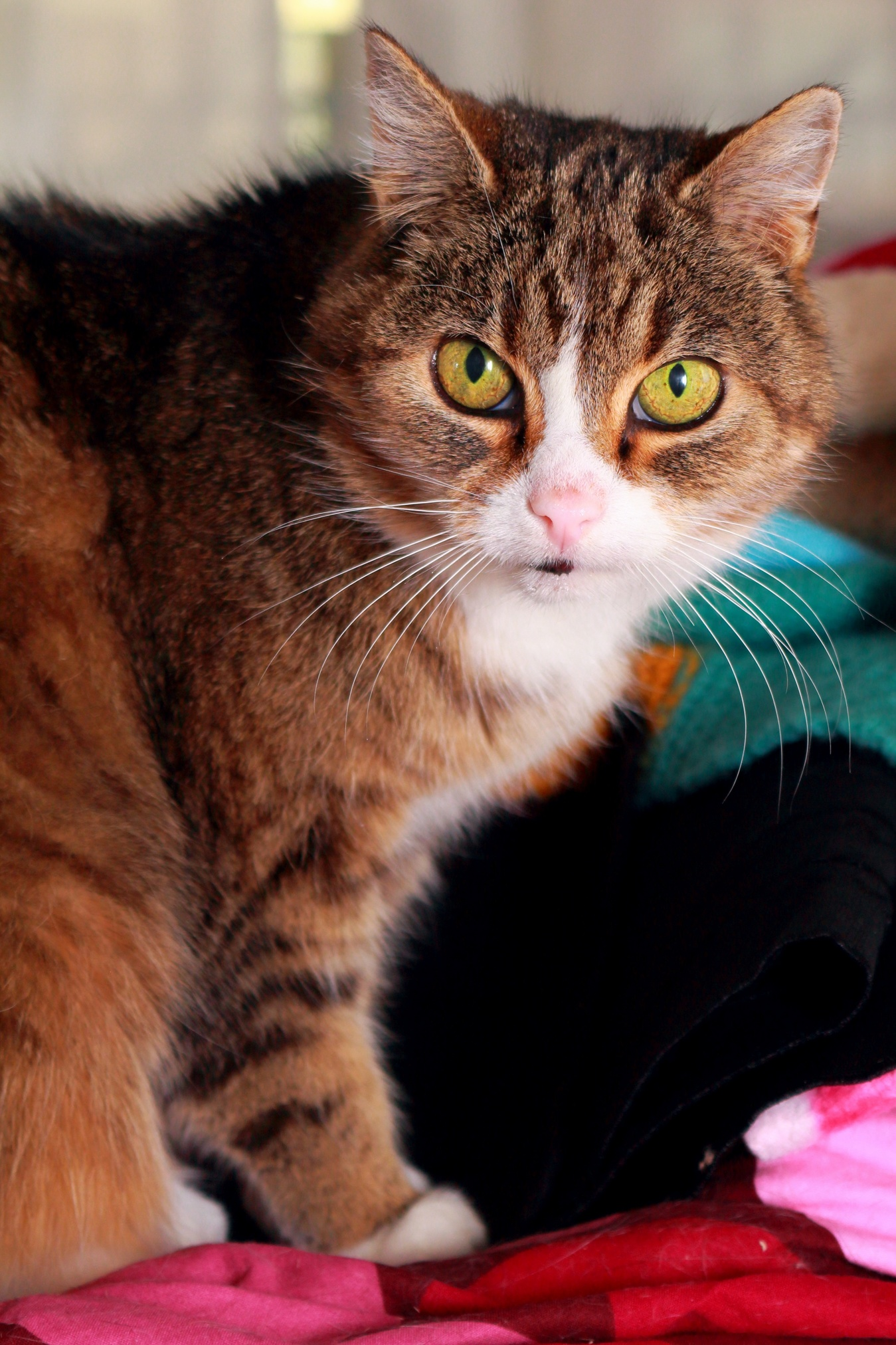My shorthair cat is very photogenic