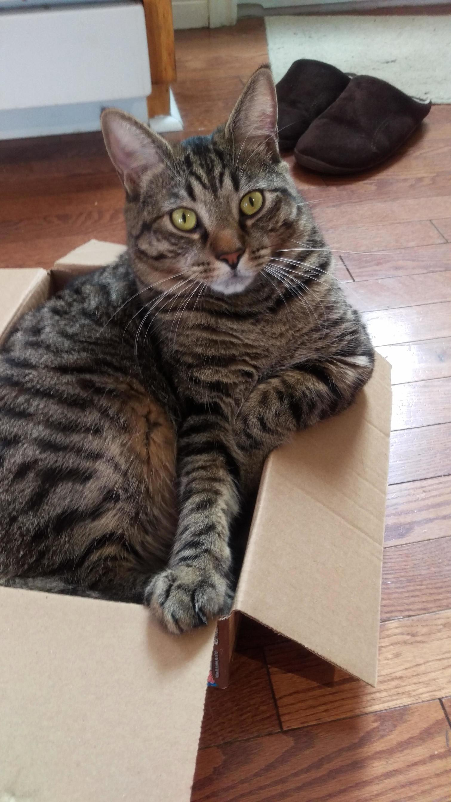 Not impressed you tried to take my box. this is jaggy dont take his spot.