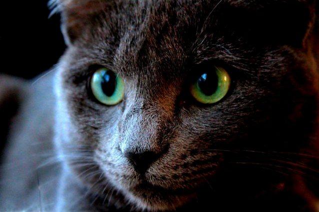 Nothing beats cat eyes