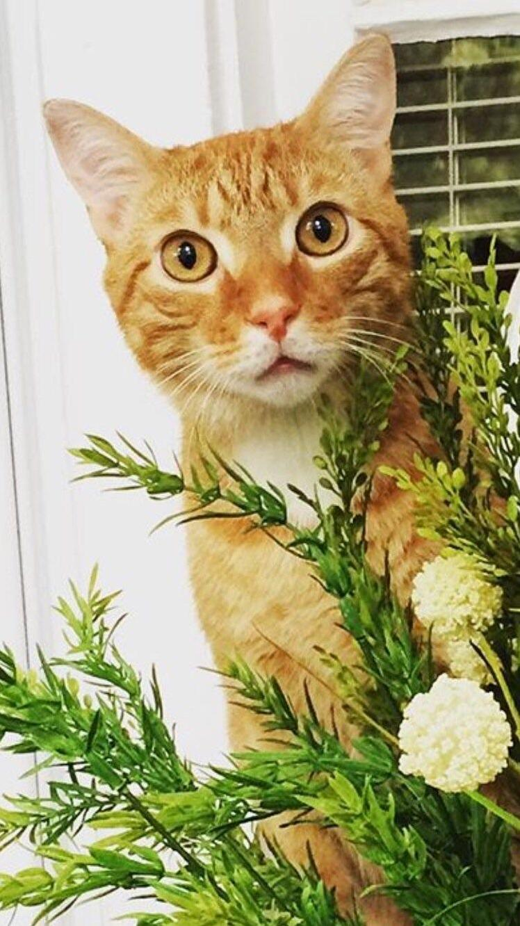 Obi and his most favorite plant in the whole wide porch.