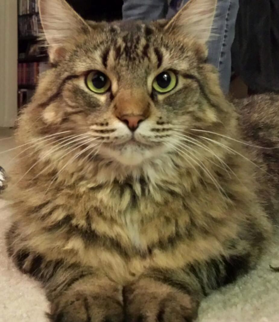 Meet Lilith A Feisty Lovable Queen Of A Cat.