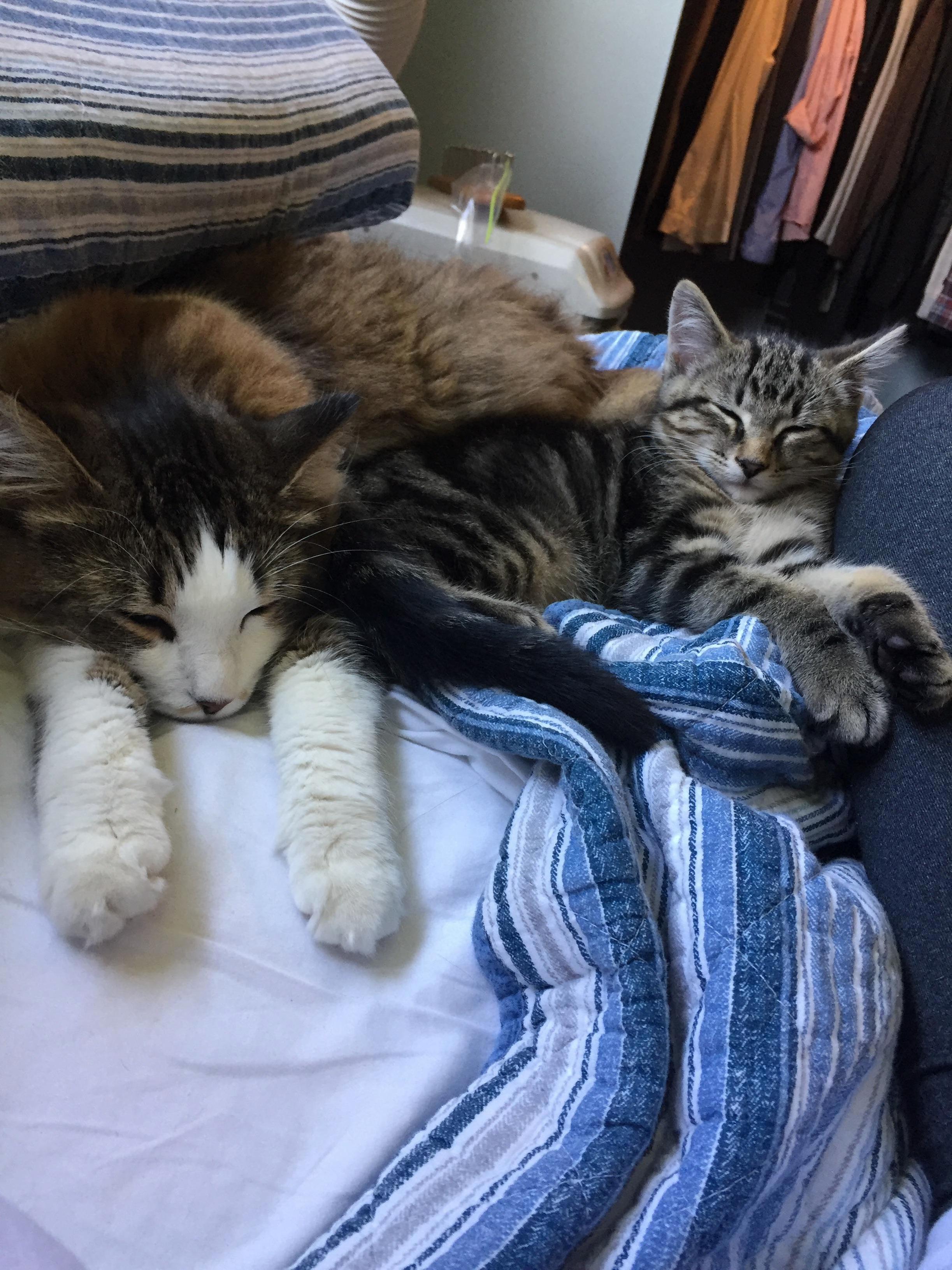 Pippin loves his big sister kona