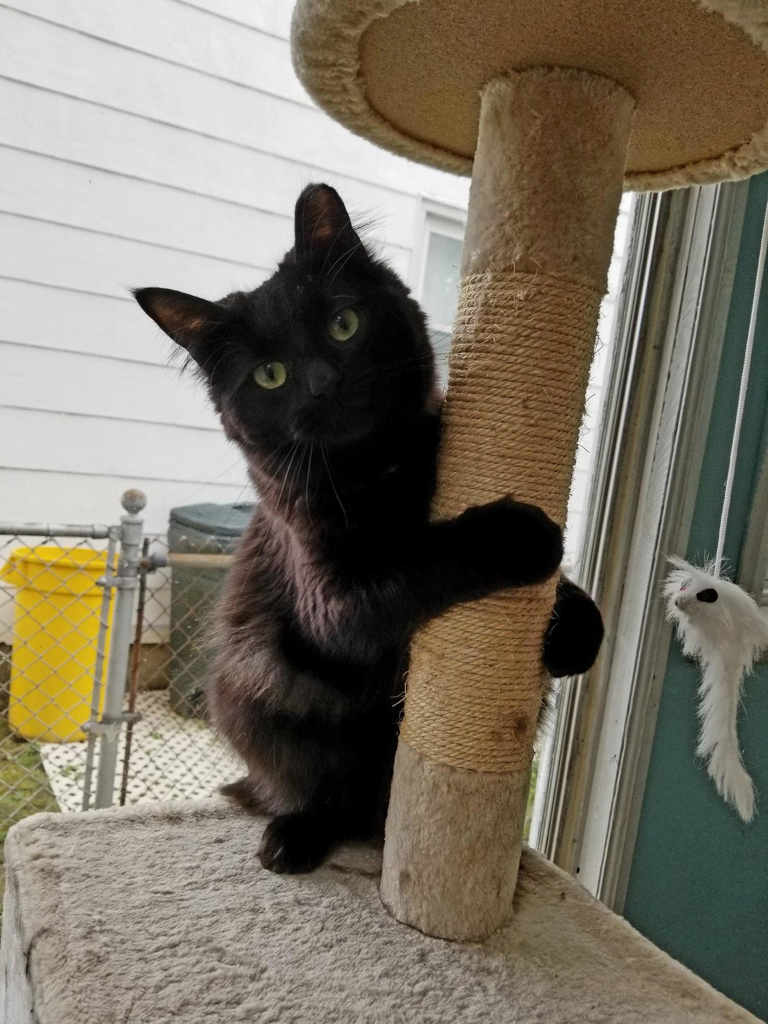 Posing or pole dancing