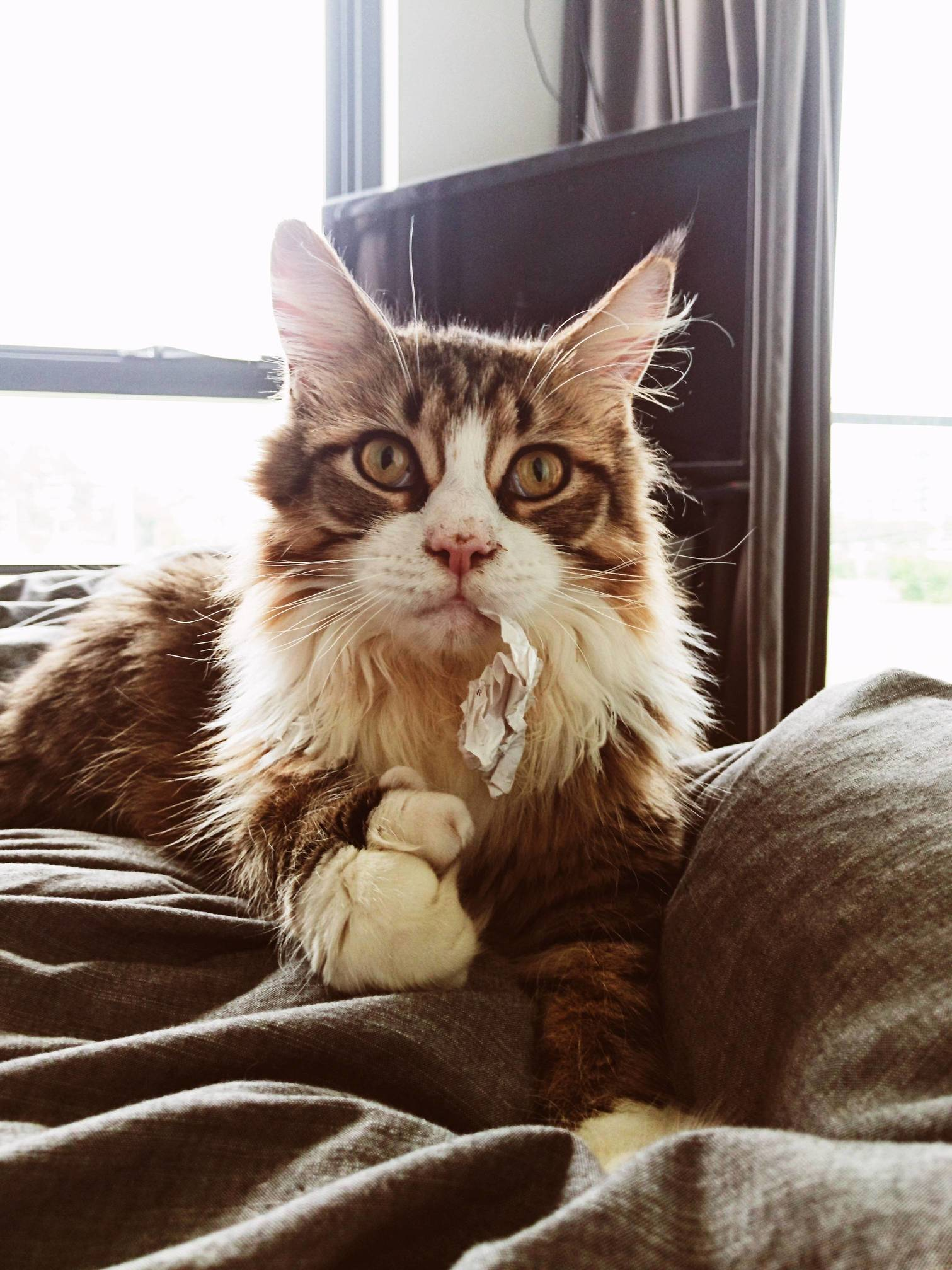 Queequeg jumped on the bed with a receipt caught in his tooth.