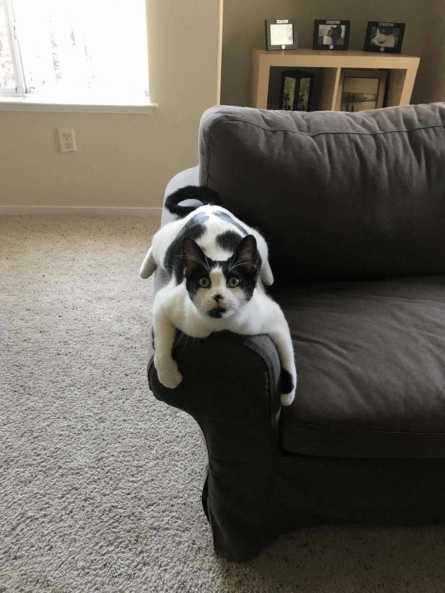 She likes to saddle the arm of the couch