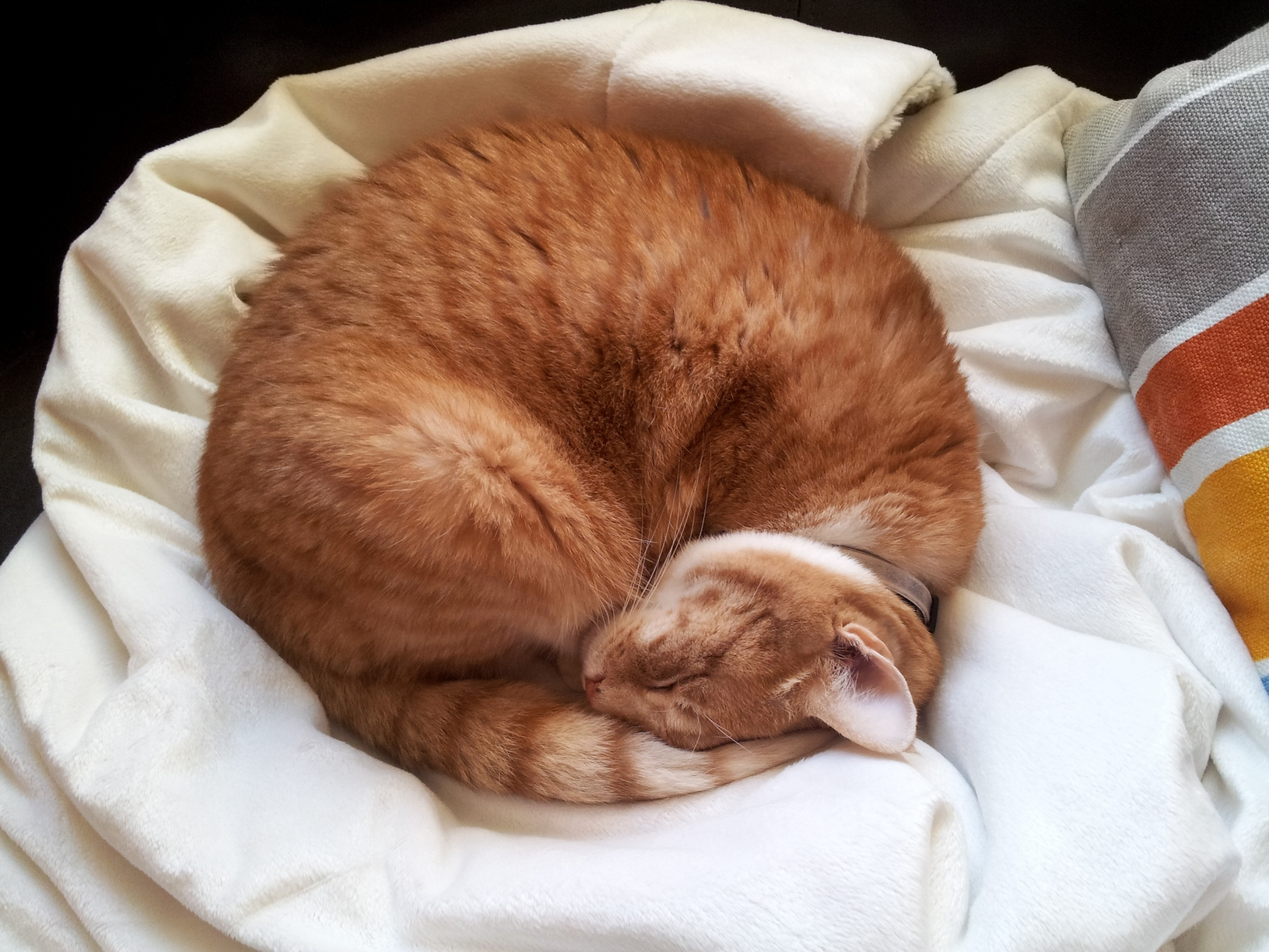 Sleeping in circles.