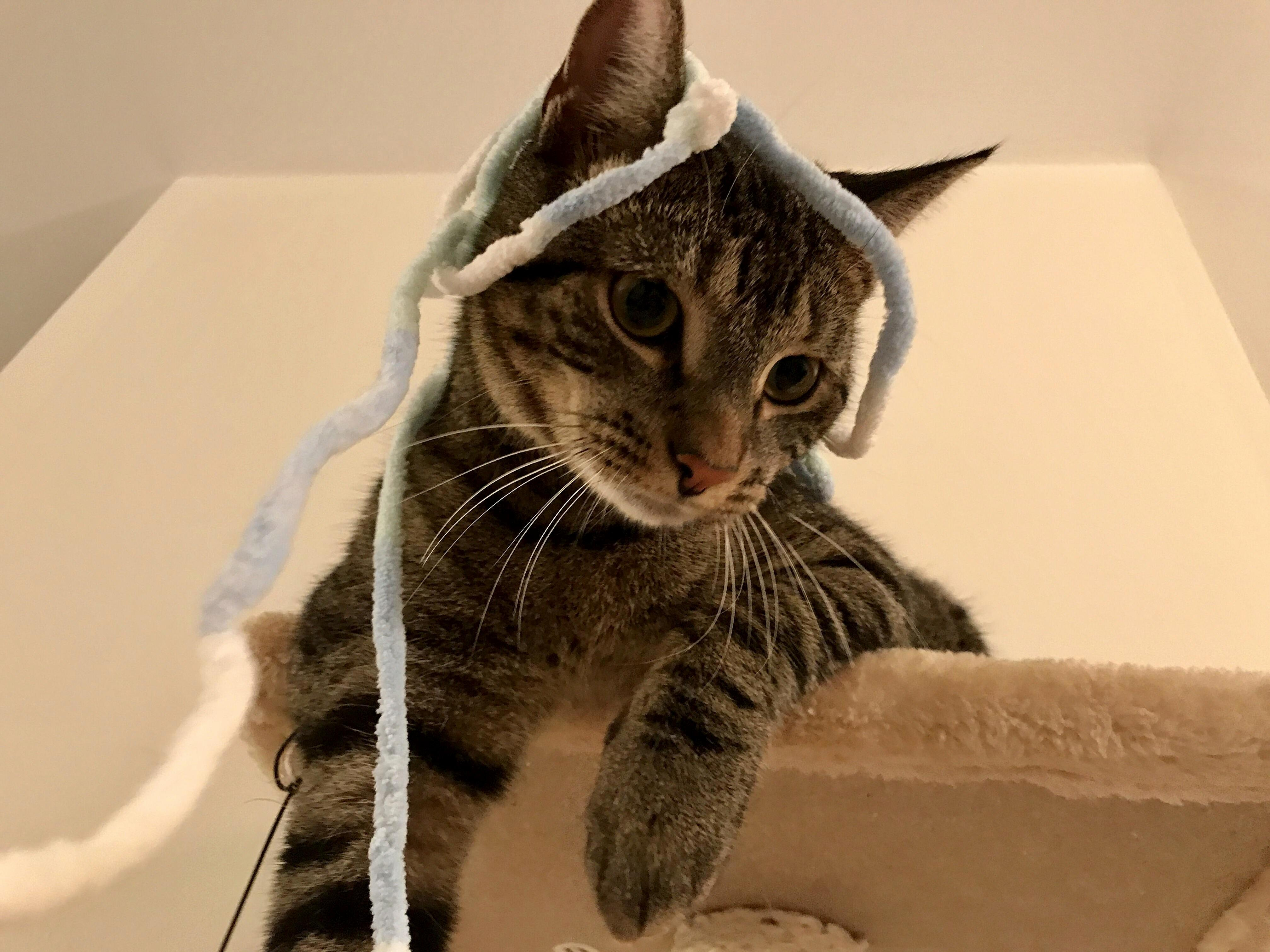 Someone had himself a crazy string party