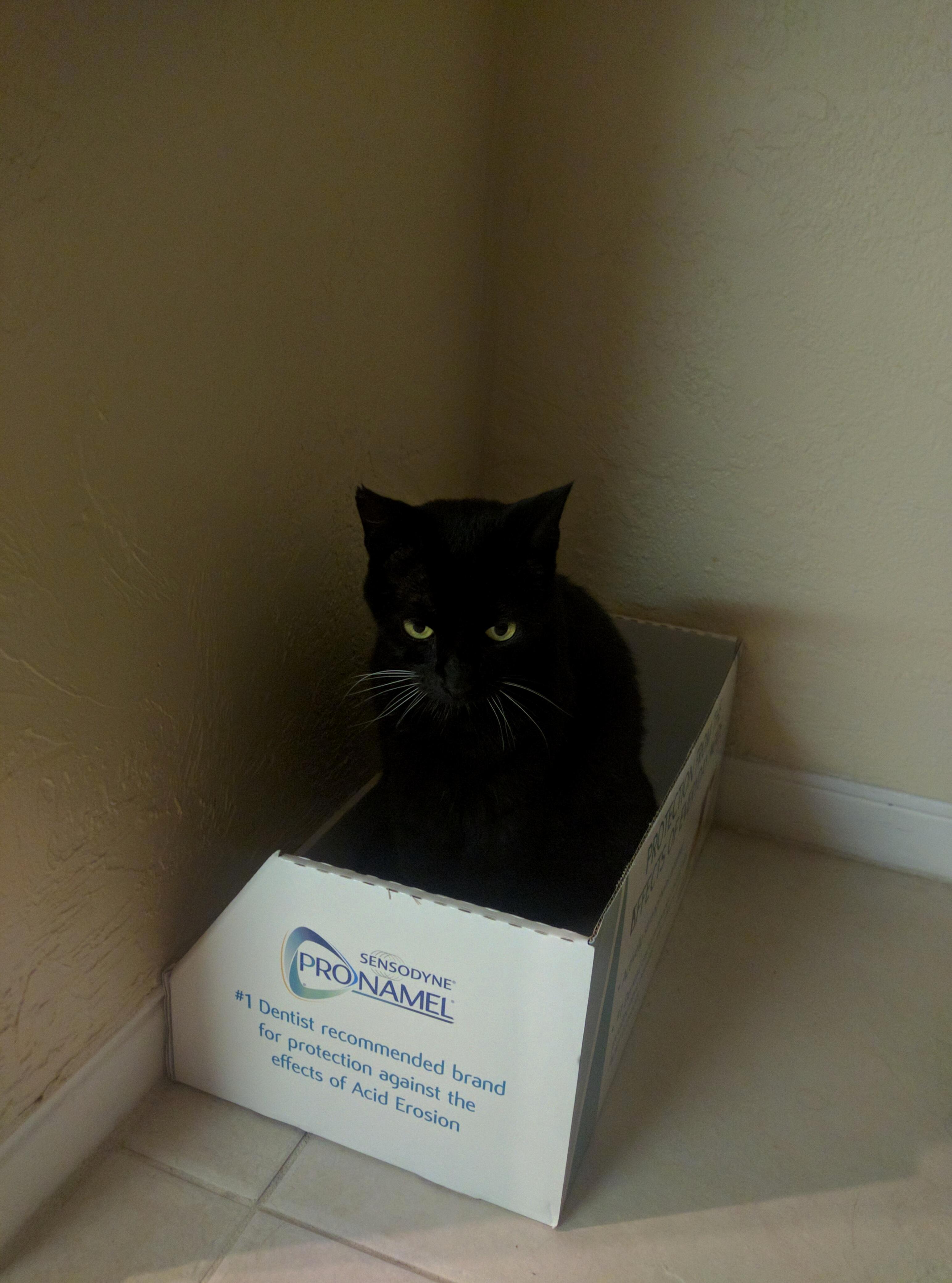 Spooky cat sits in box.