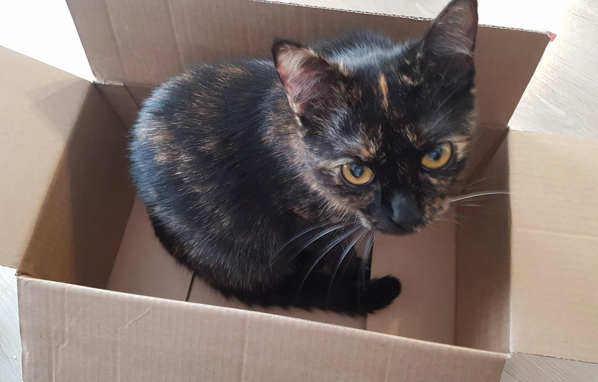 Spot in a box