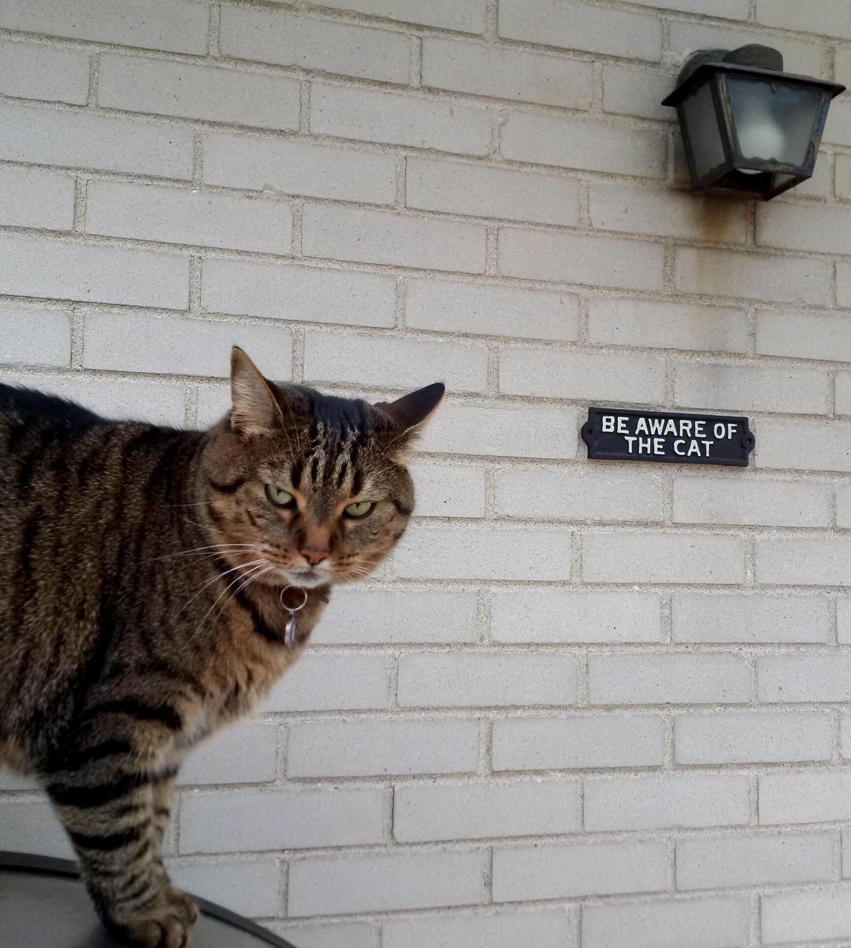Take caution cat.