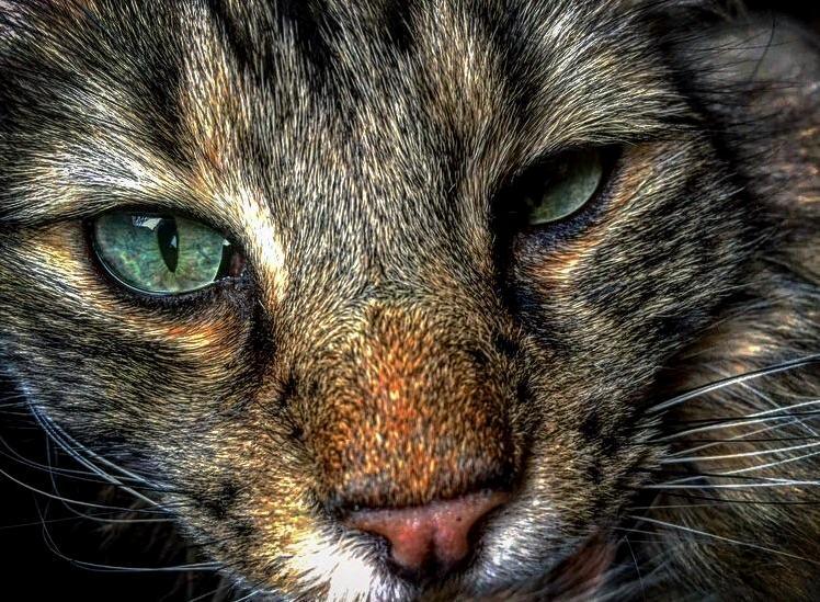 The prettiest of eyes