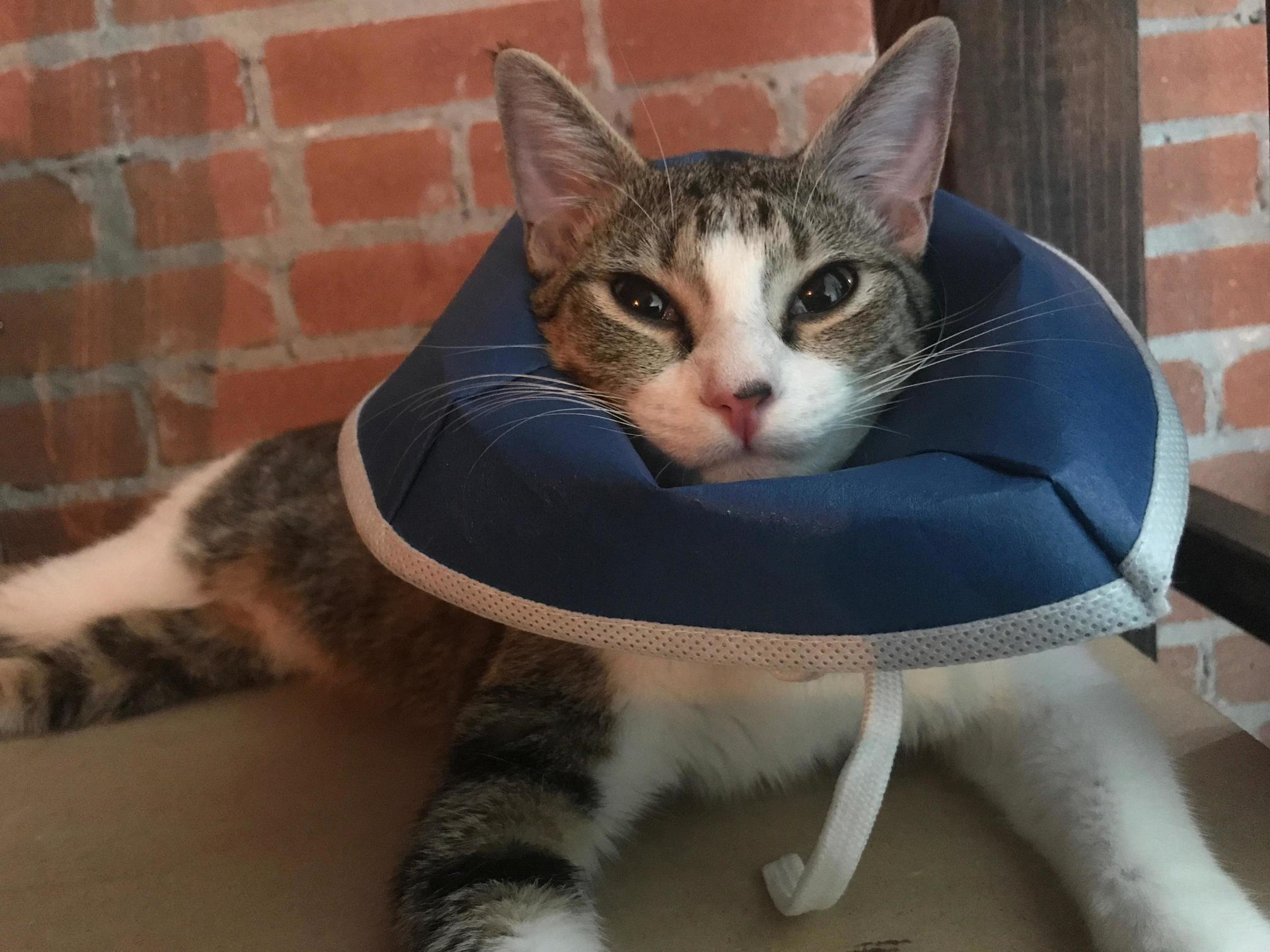 The vet calls it my party hat but i dont see any party around here….