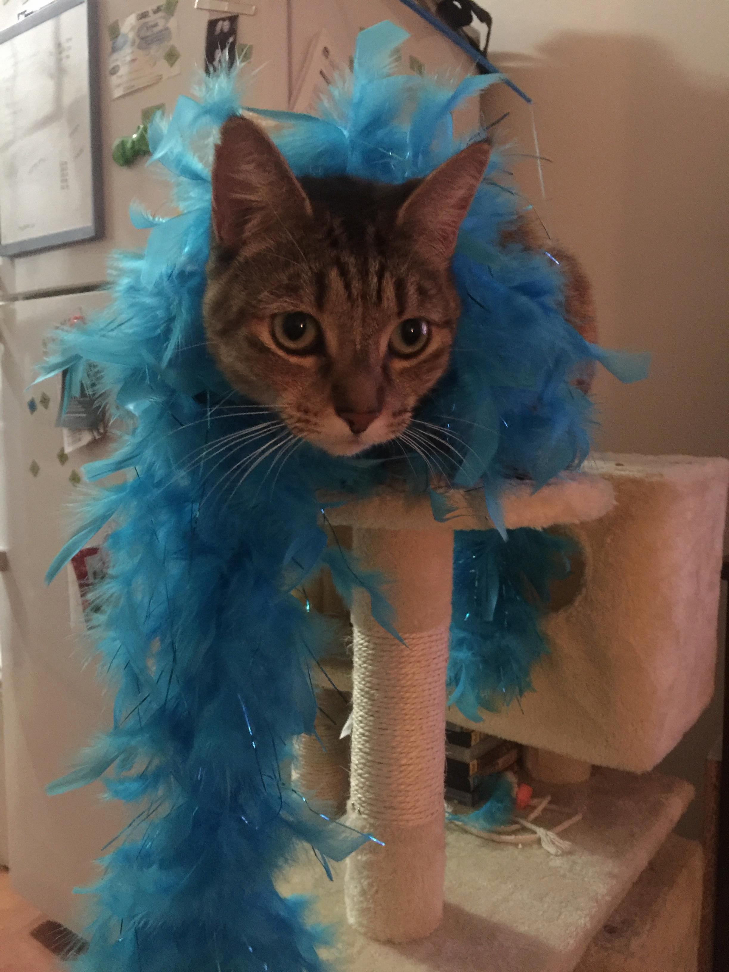 This is my life meow feather boa remix