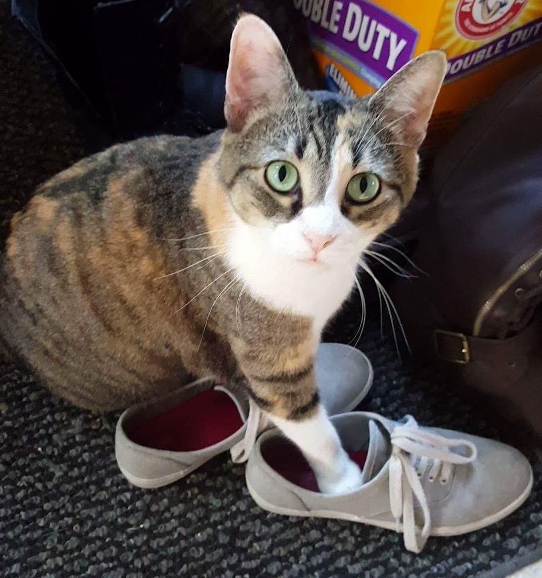 This is my shoe now