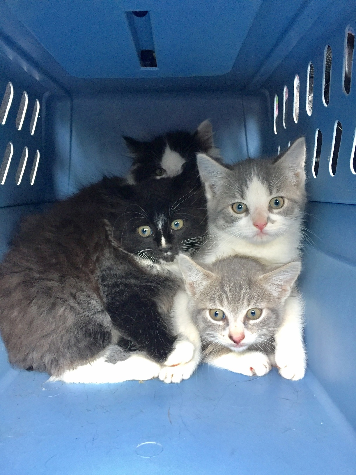Were semi feral kittens being moved to a new foster home. please dont eat us…