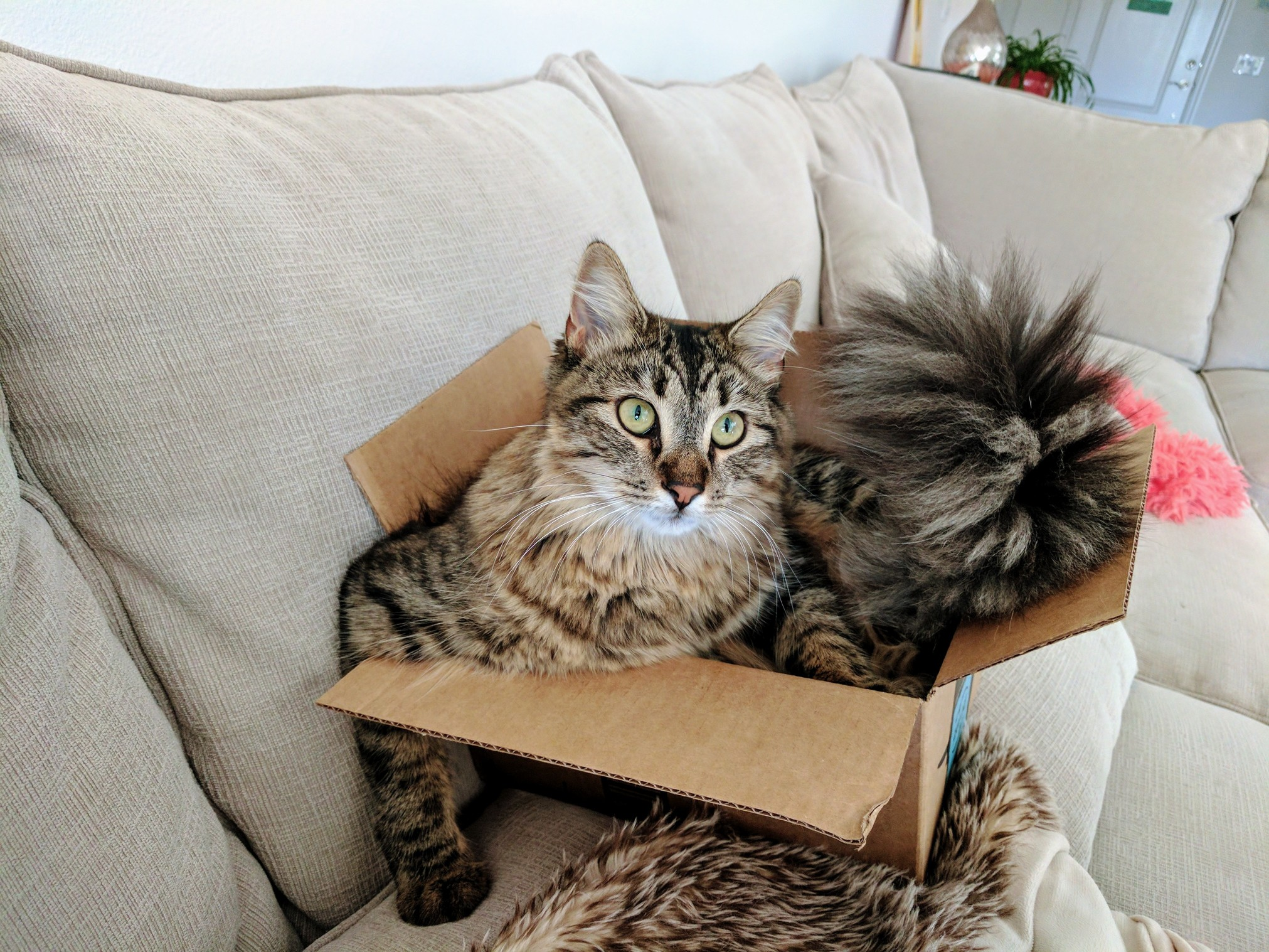 When youre too big for the box but you just really dont care.
