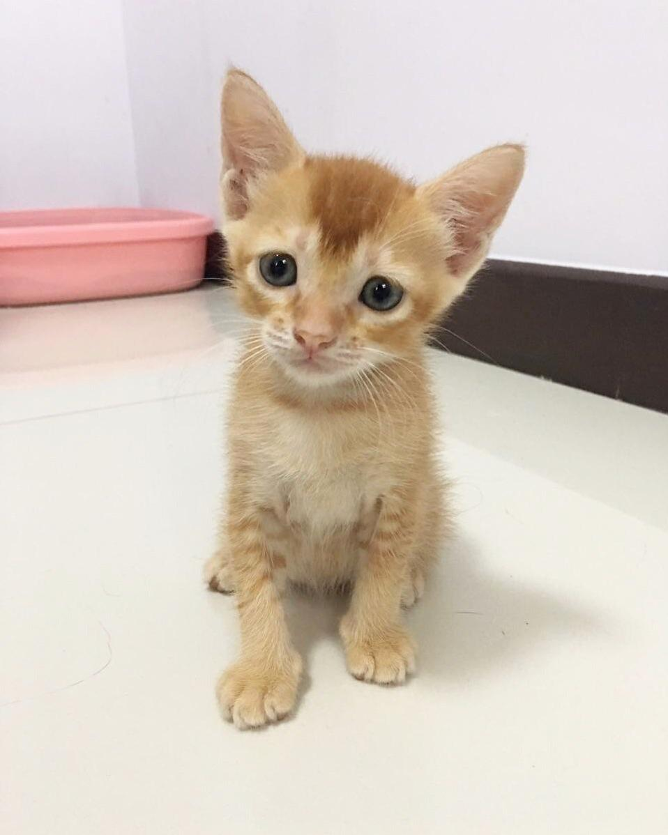 Will be adopting this cutie boy once hes weaned