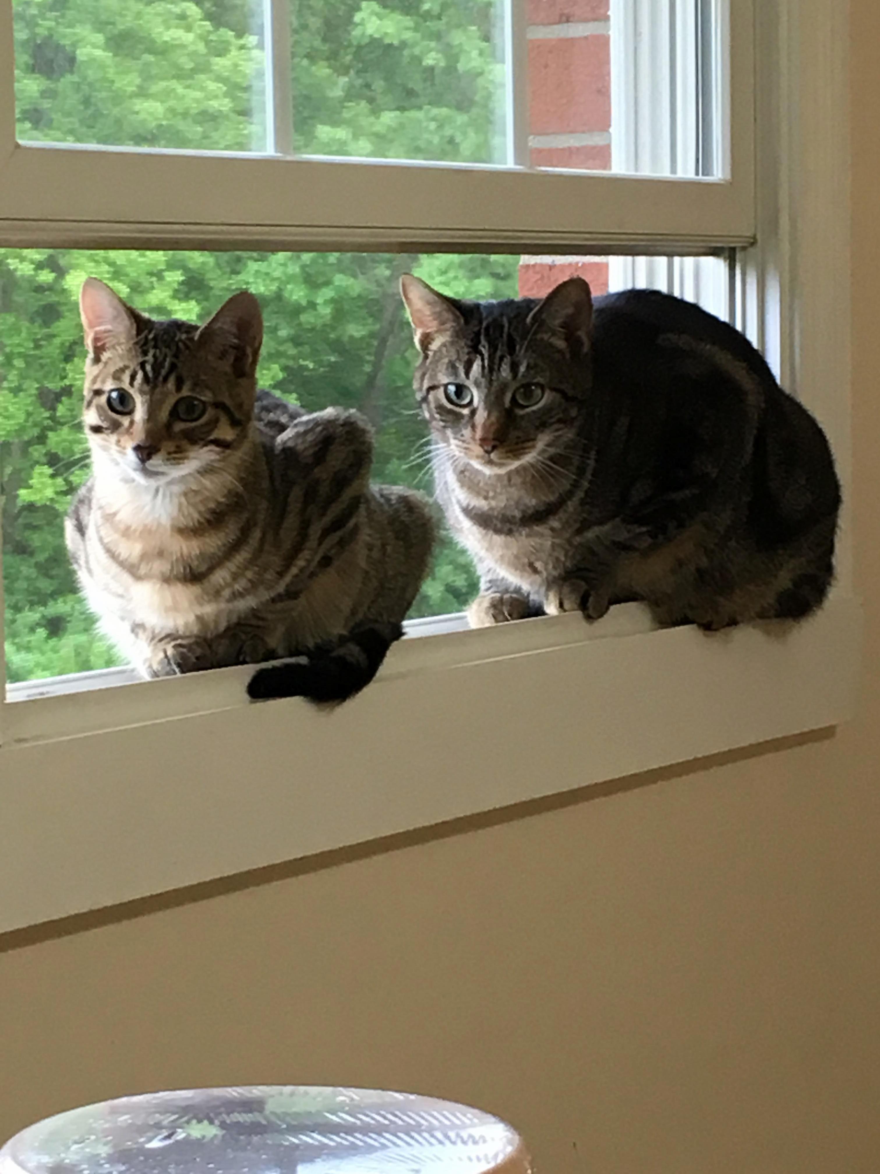 Window loaves.