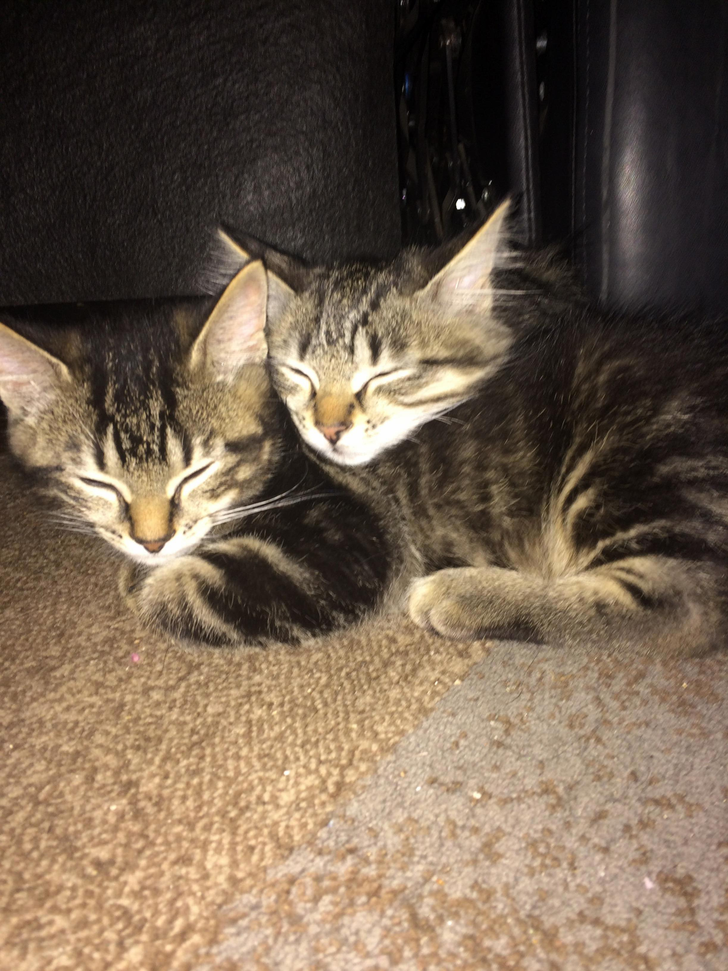 2 cute