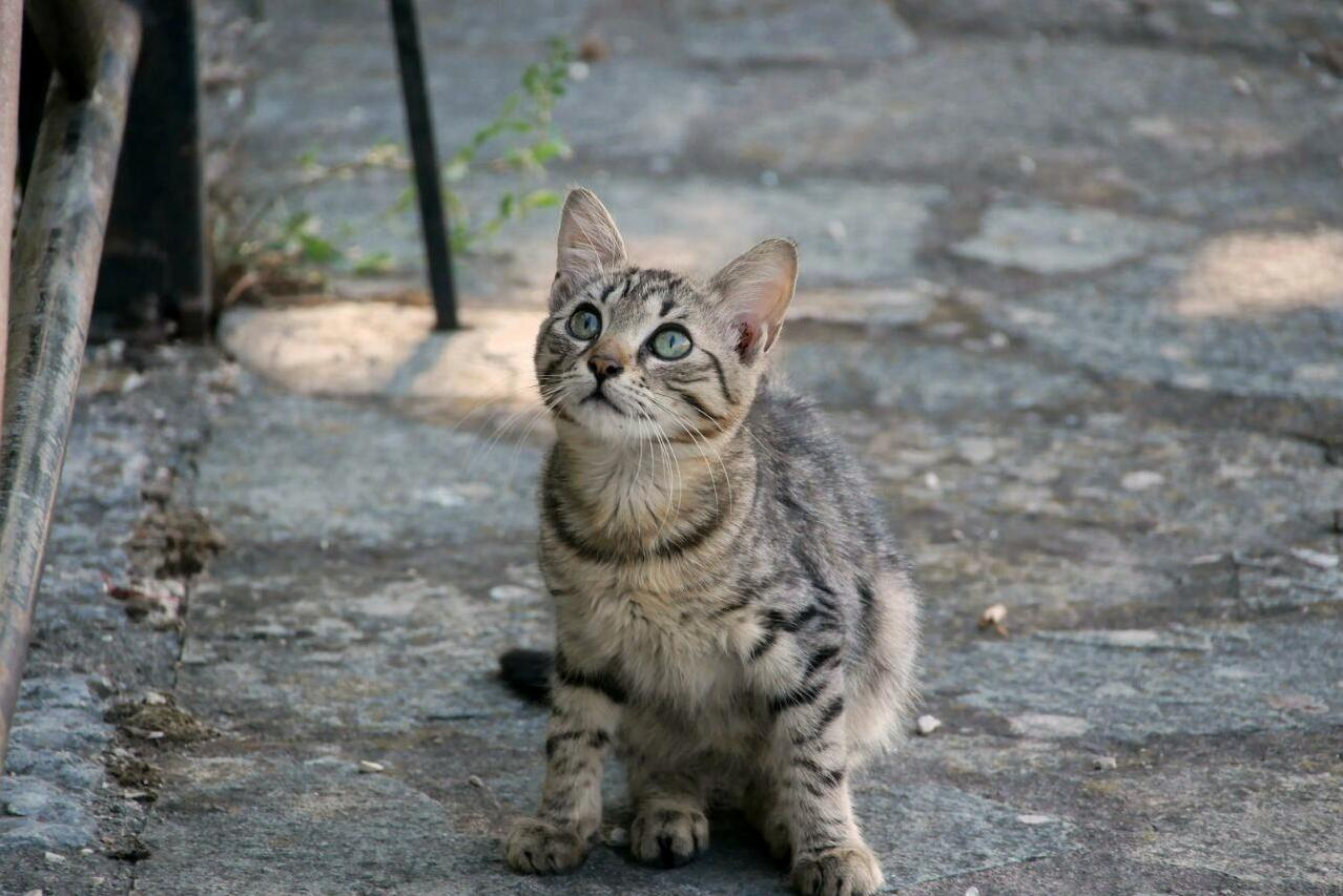 A kitten we met in greece looking at my friend