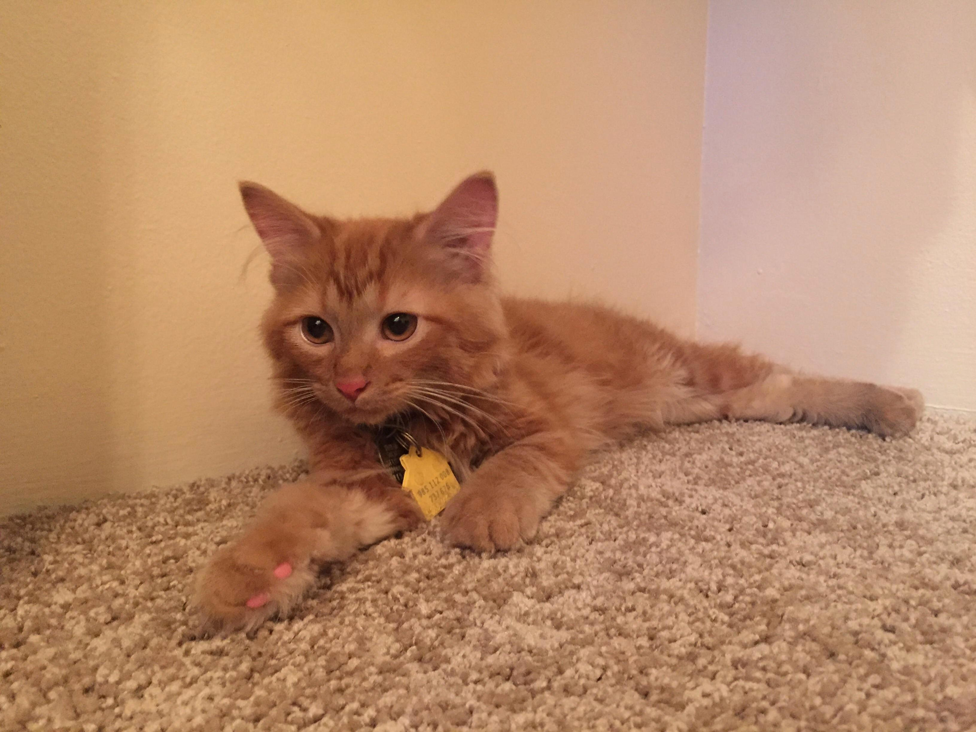 Adopted this little ginger a bit over a week ago. its amazing how close me and omar have gotten already.