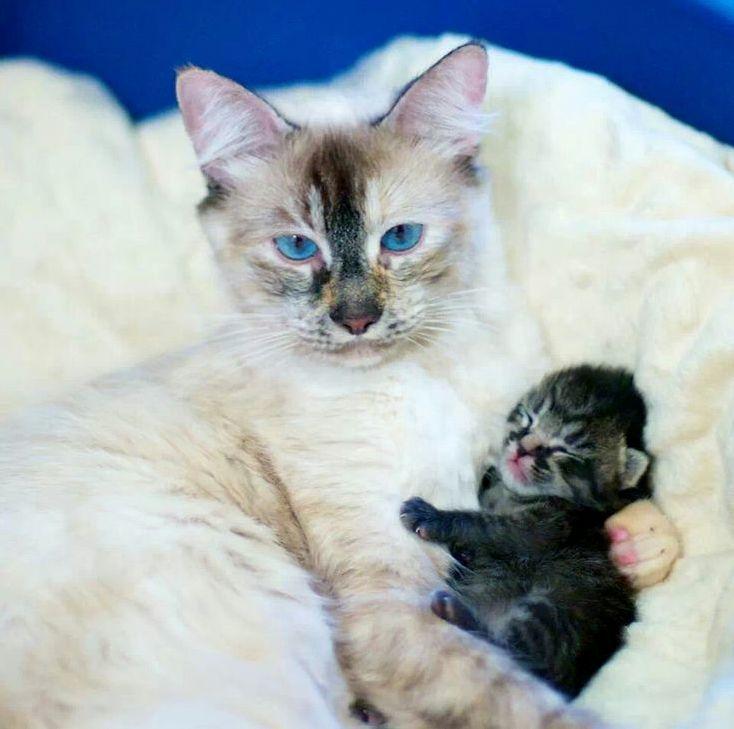 Aww cute little kitty