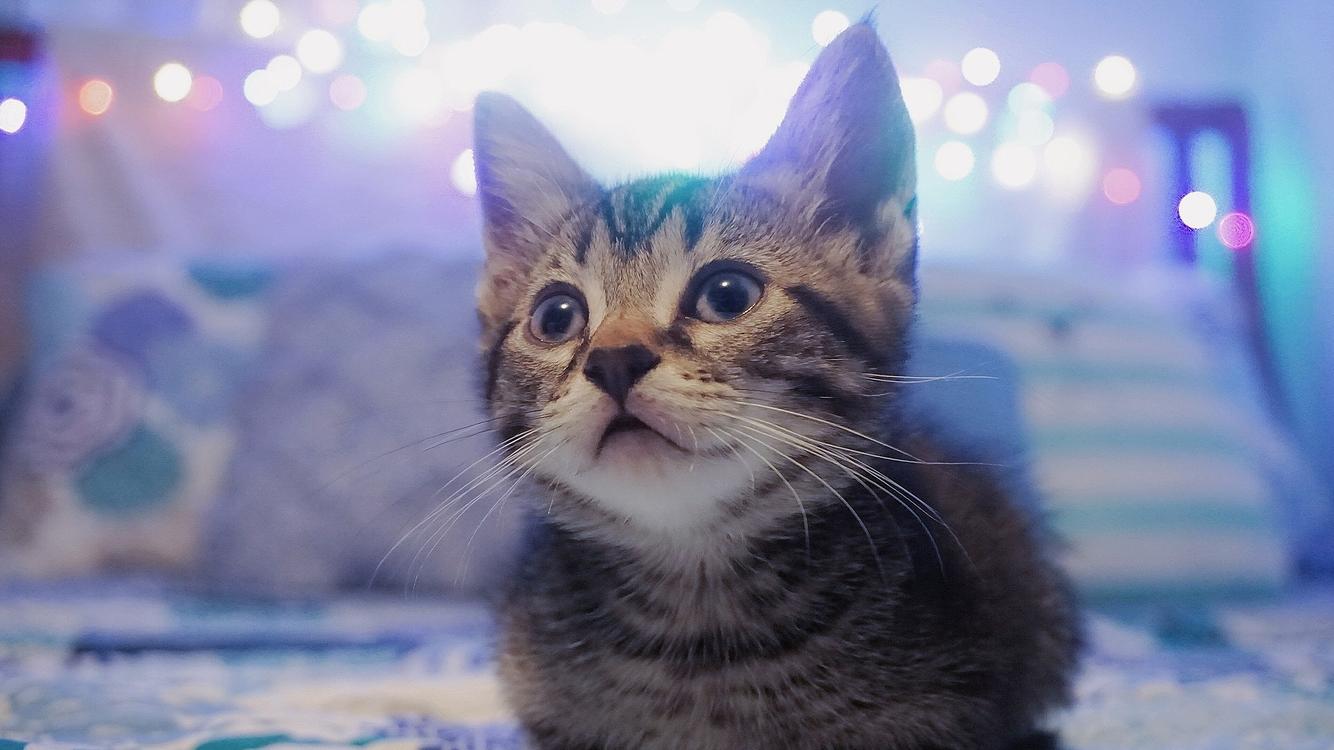 Baby of my siamese cat