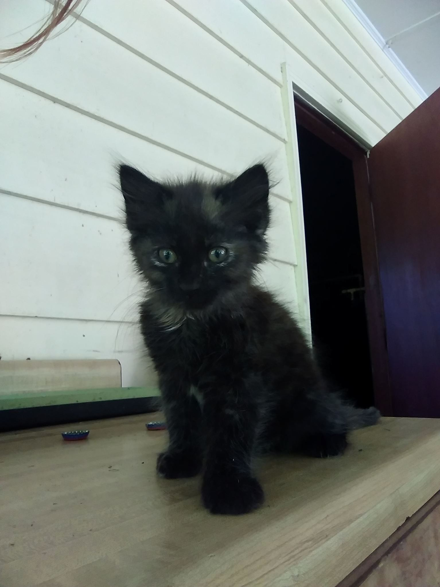 Help me name this friendly little soot sprite