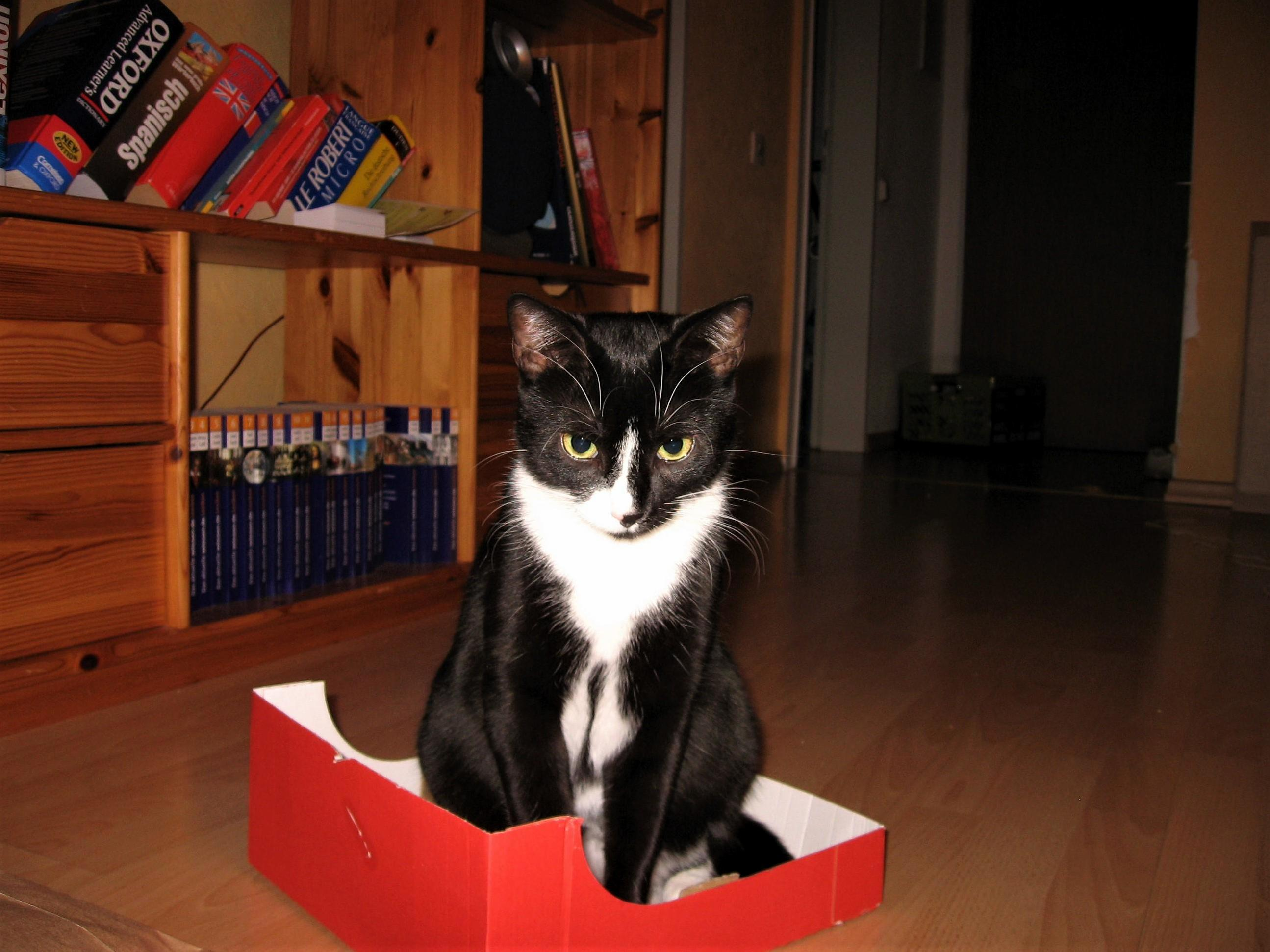 Im not sure if shes too happy with her new box