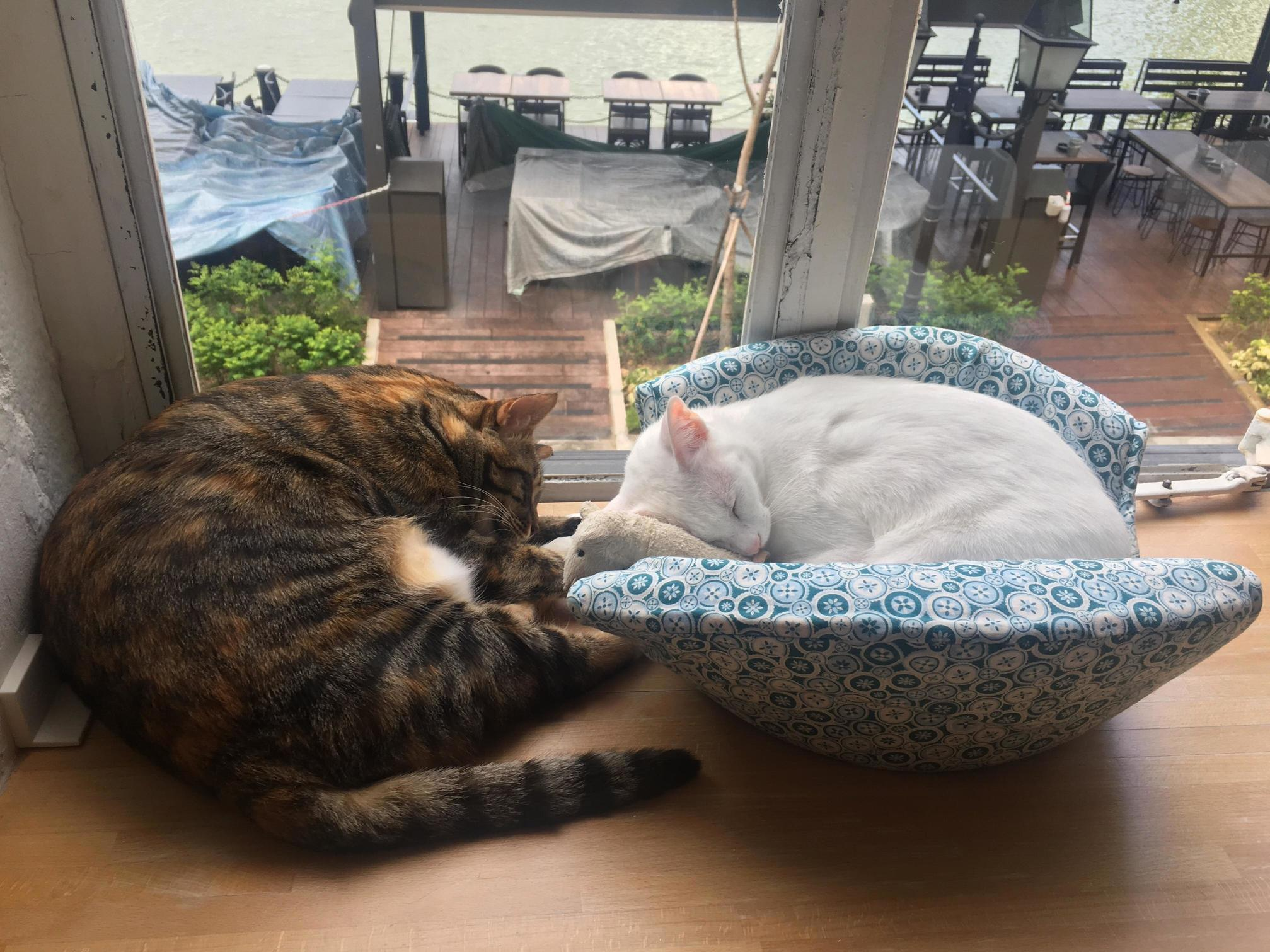Just two cats sleeping peacefully over weekend