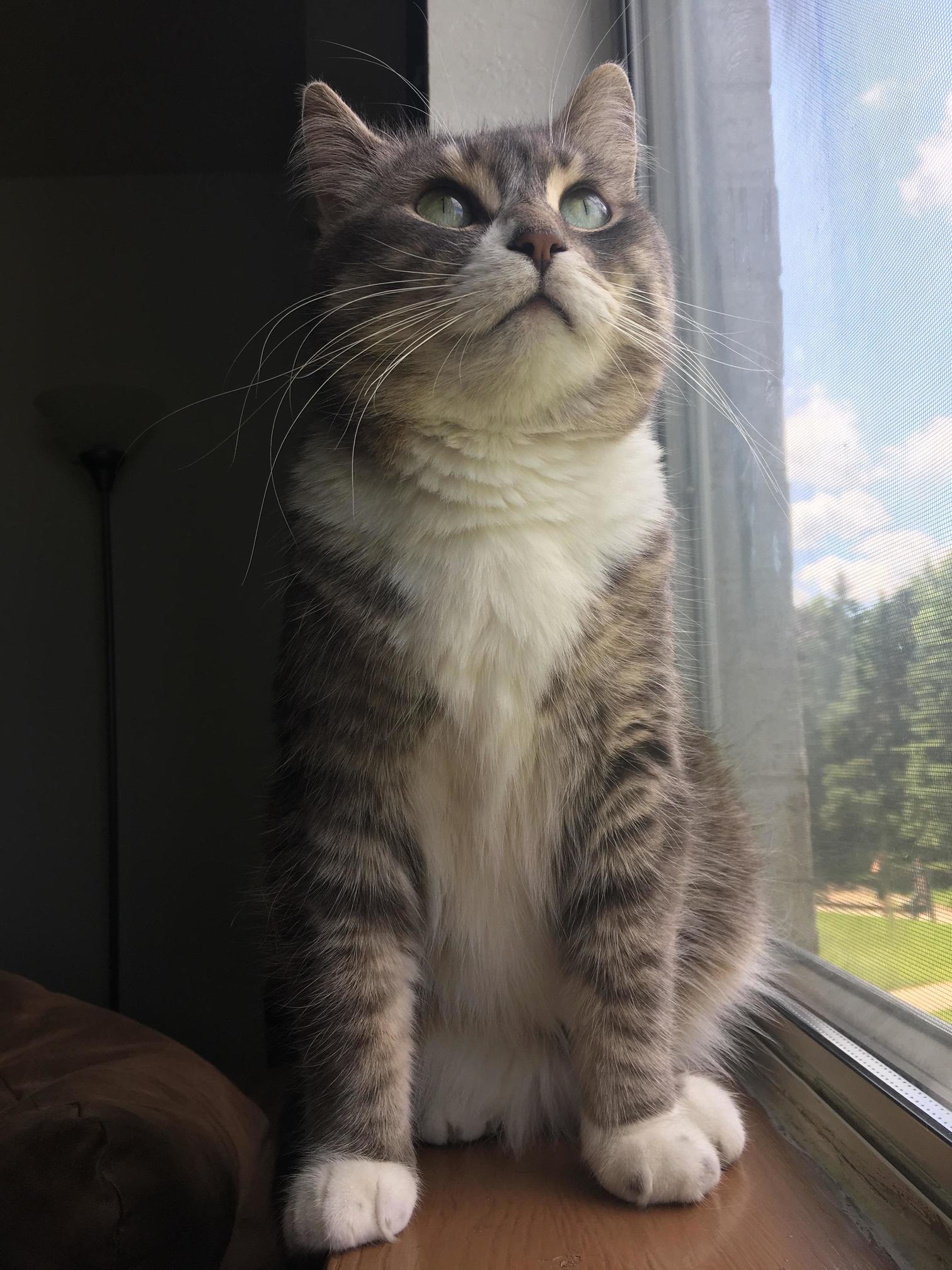 Little window cat