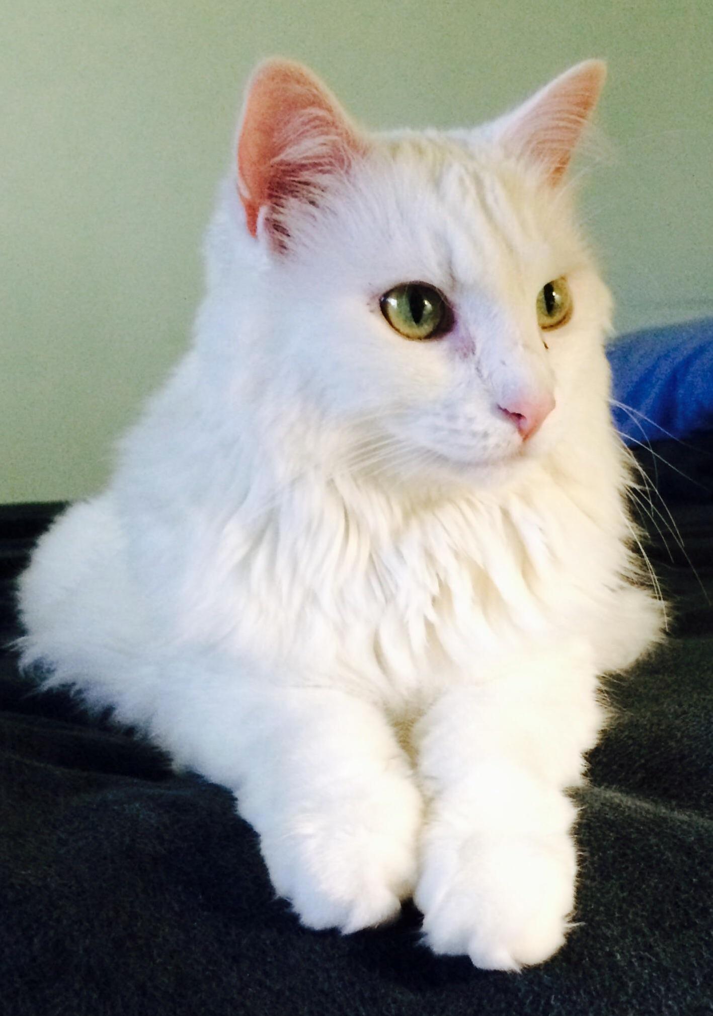 Meet mr. kitty