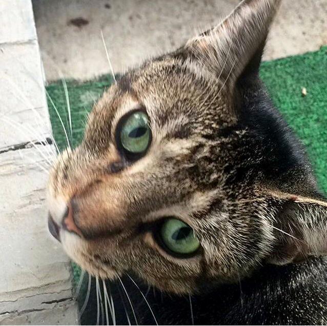 Meet my lil street kitty dayman
