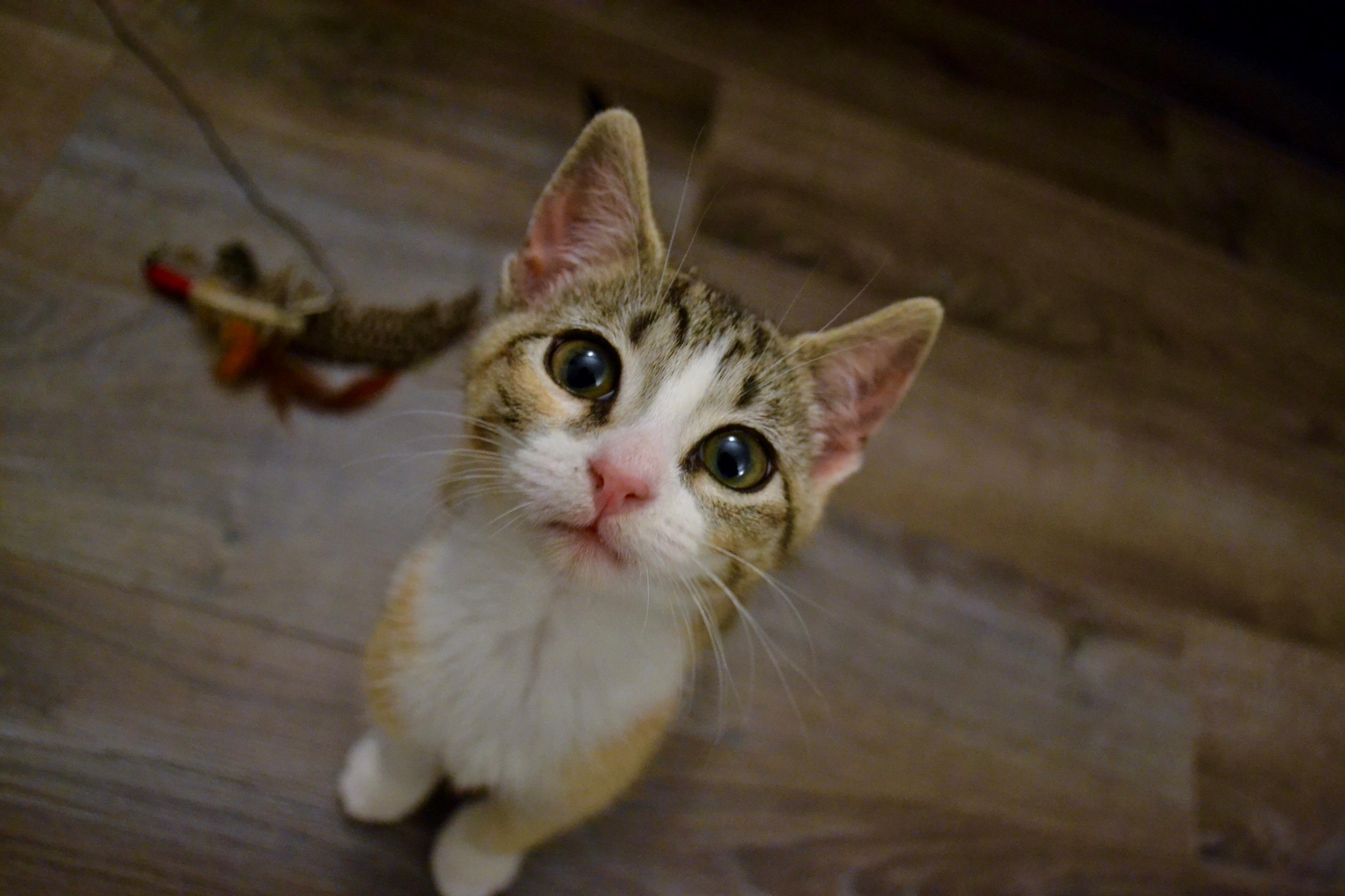 Meet my new kitten chutney